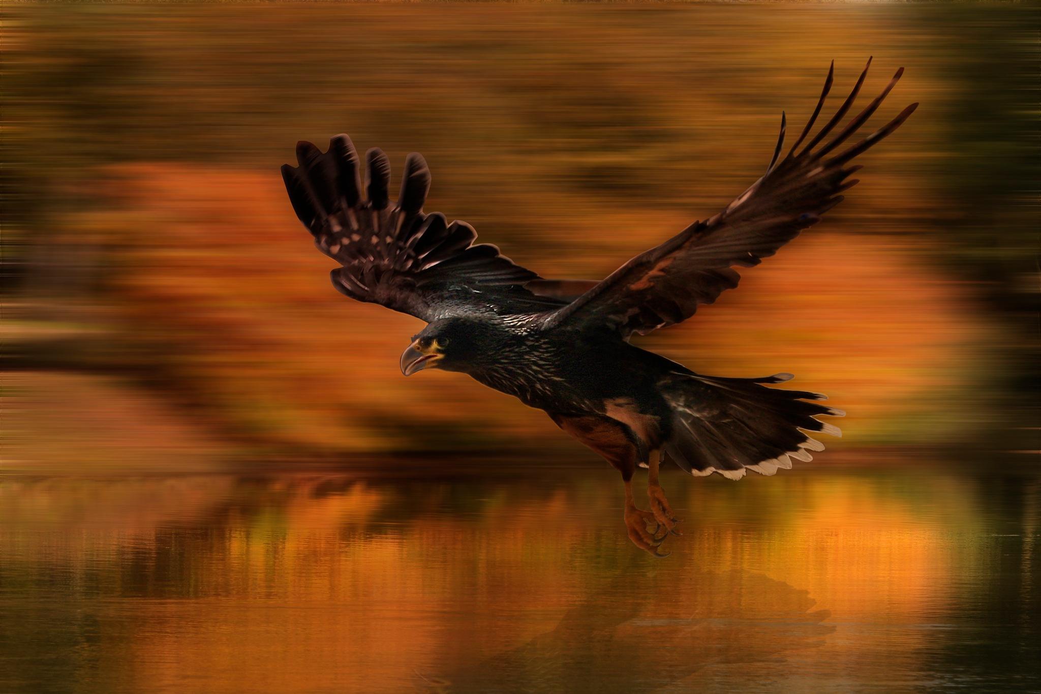 flying by Renaat
