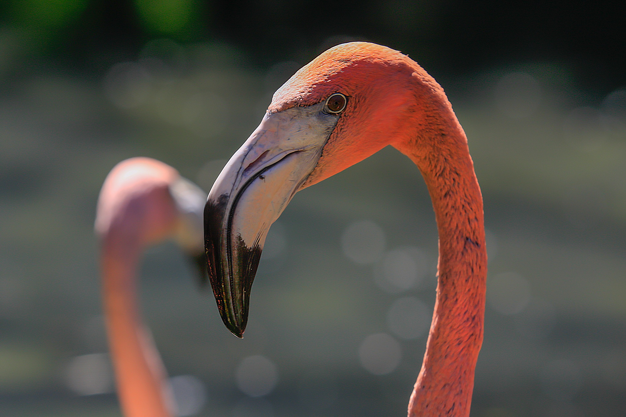 roze flamingo by Renaat