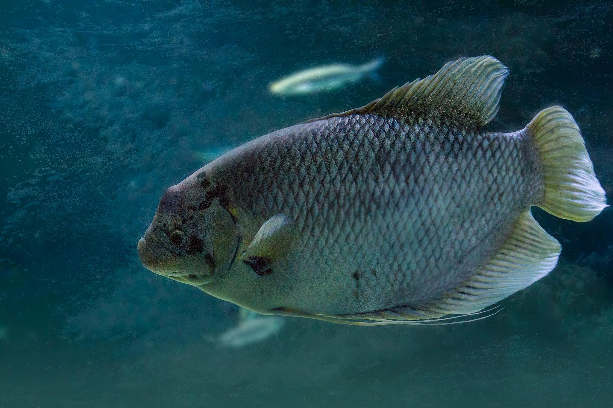 seawater fish by Renaat
