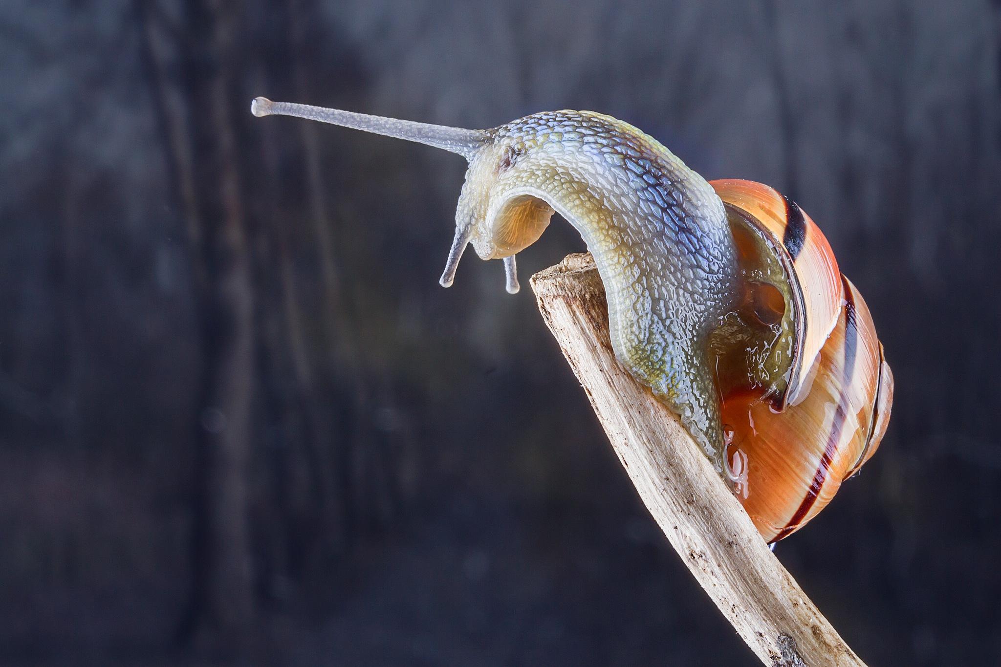 slak by Renaat