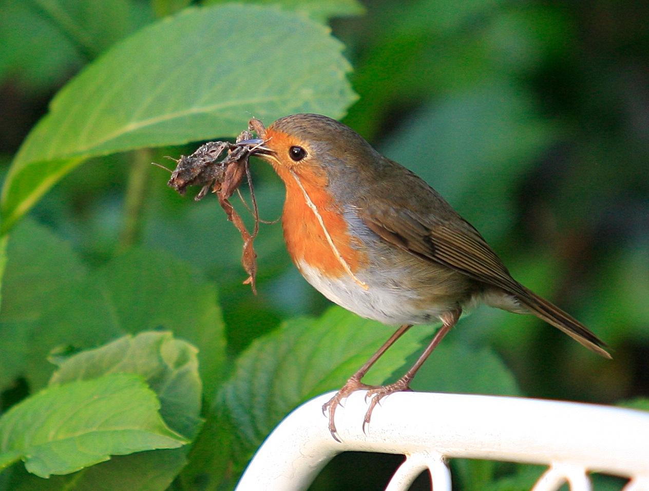 een vroege vogel by Renaat