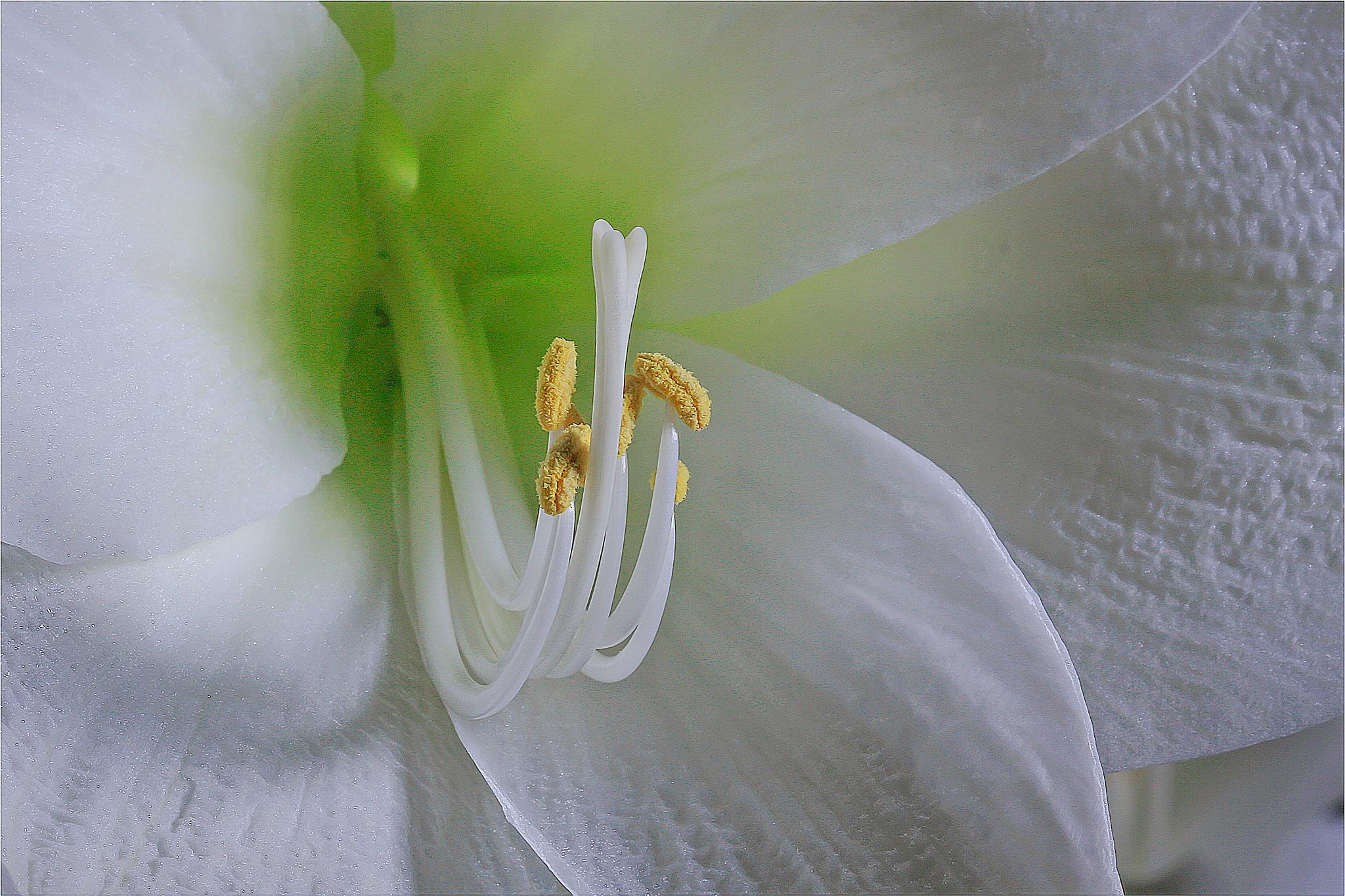flower by Renaat