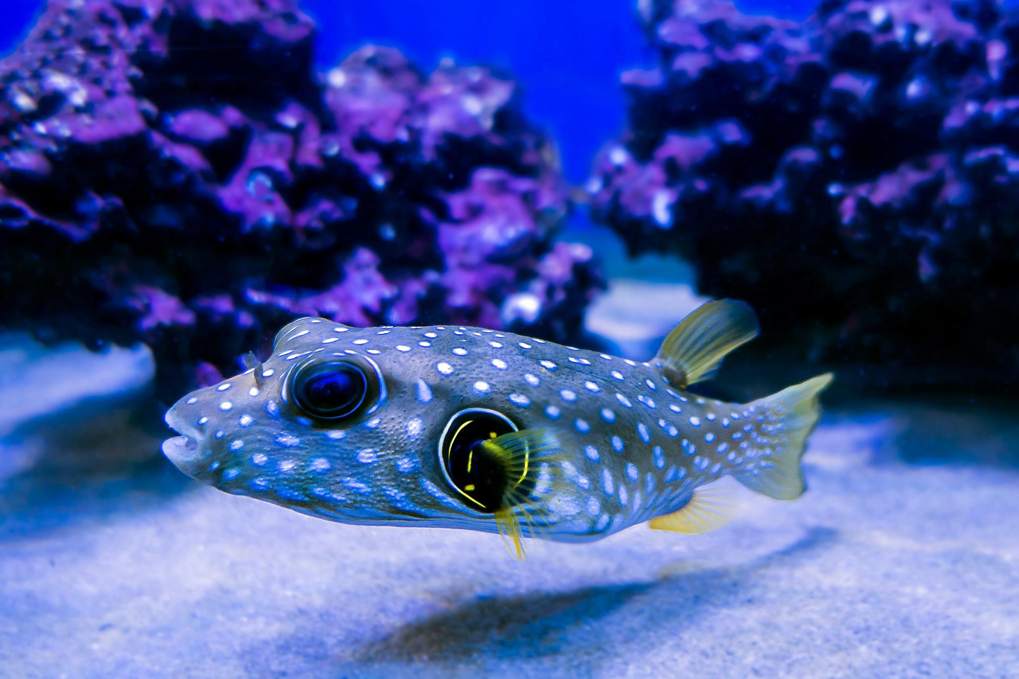 exotic fish by Renaat