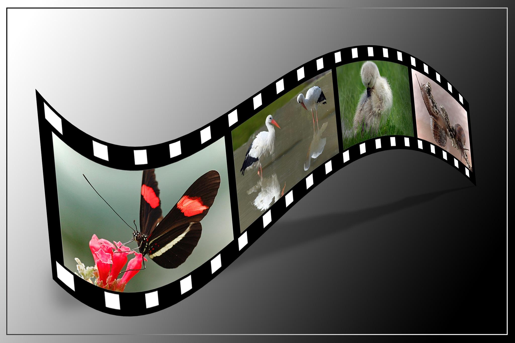 filmstrip by Renaat