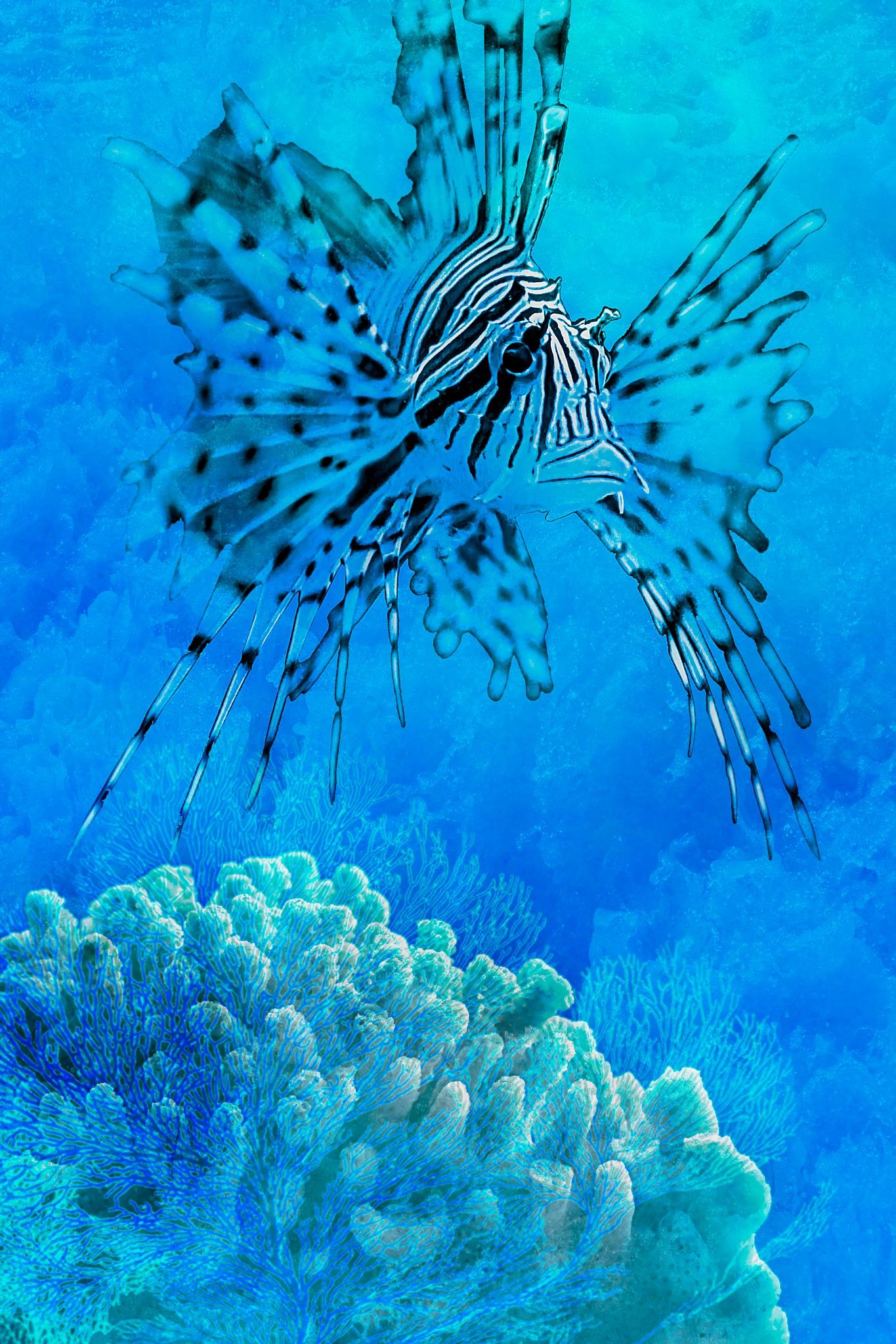 koraalduivel by Renaat