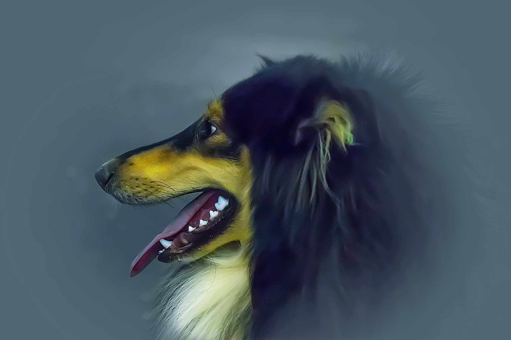 dog by Renaat