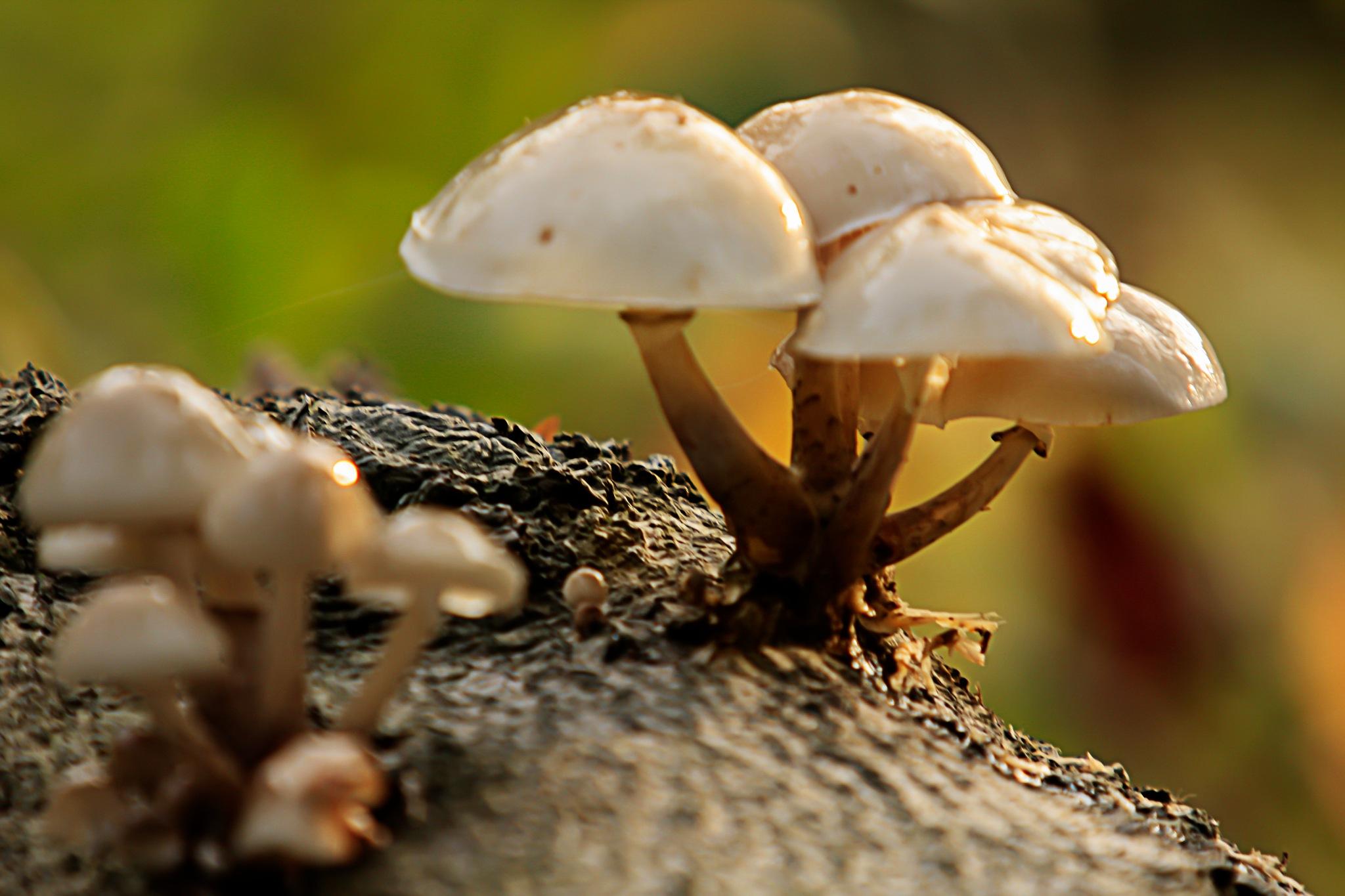 mushrooms by Renaat
