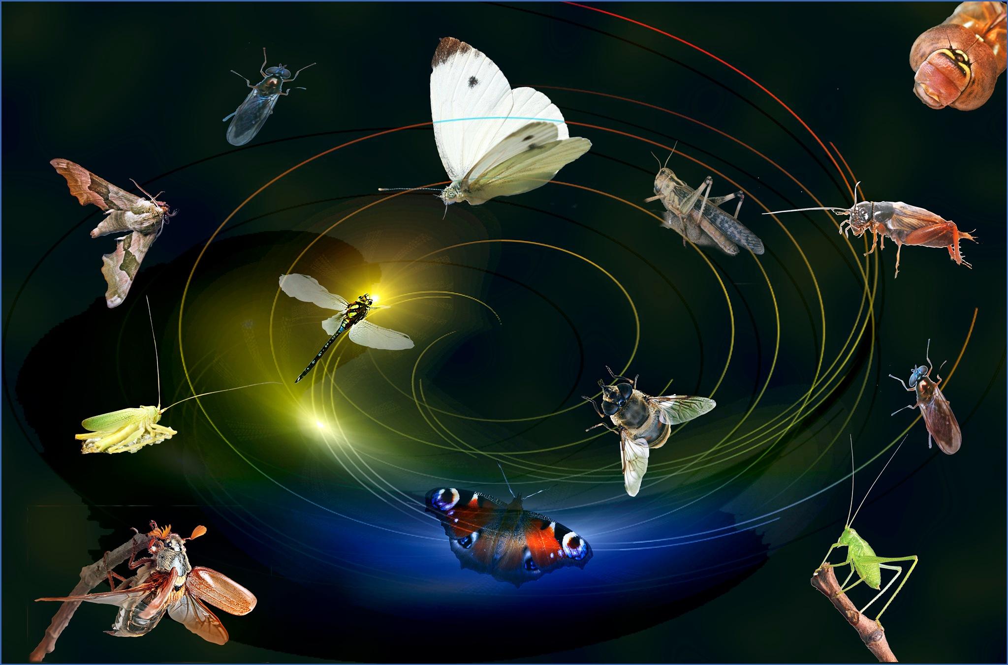 insecten by Renaat