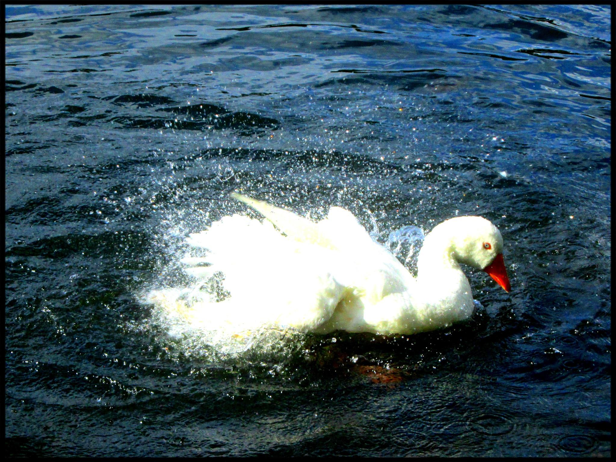 Splash ~~~  I miss this little guy by Maria Nunes