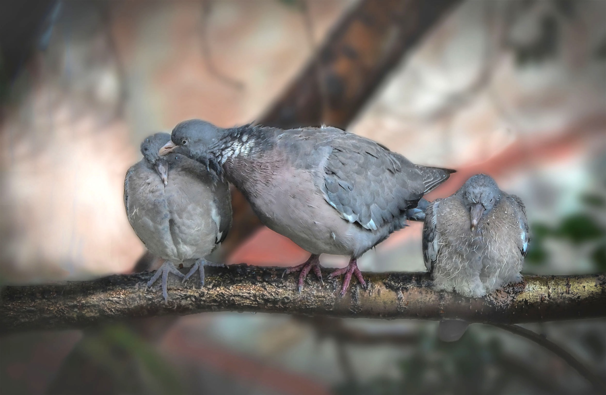 wet families by Tanasije Savic