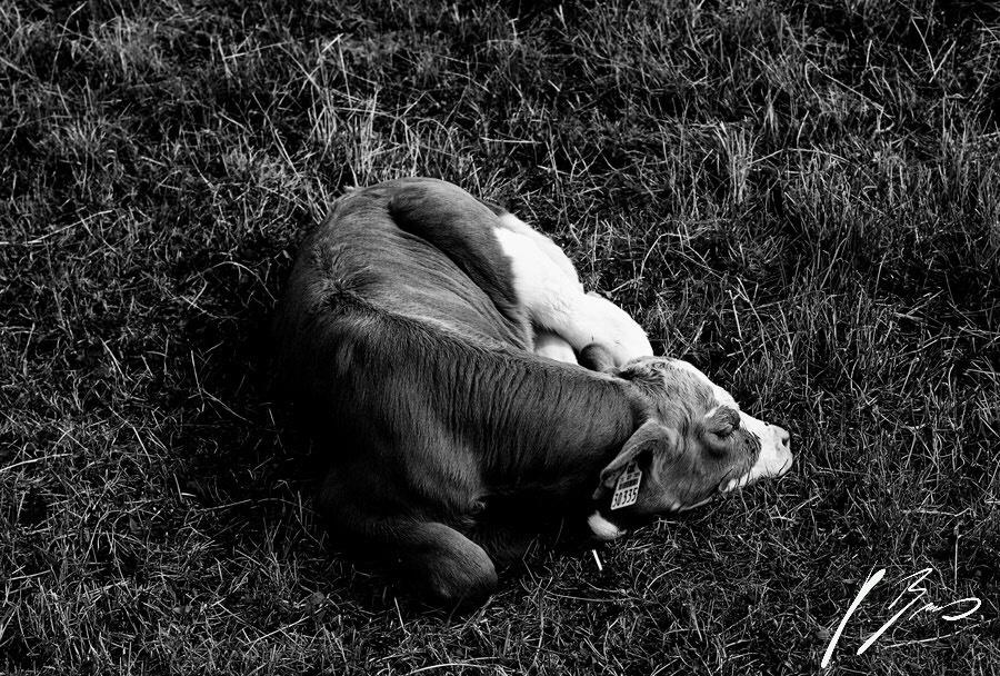 SleepingBeauty by VMBPhotography