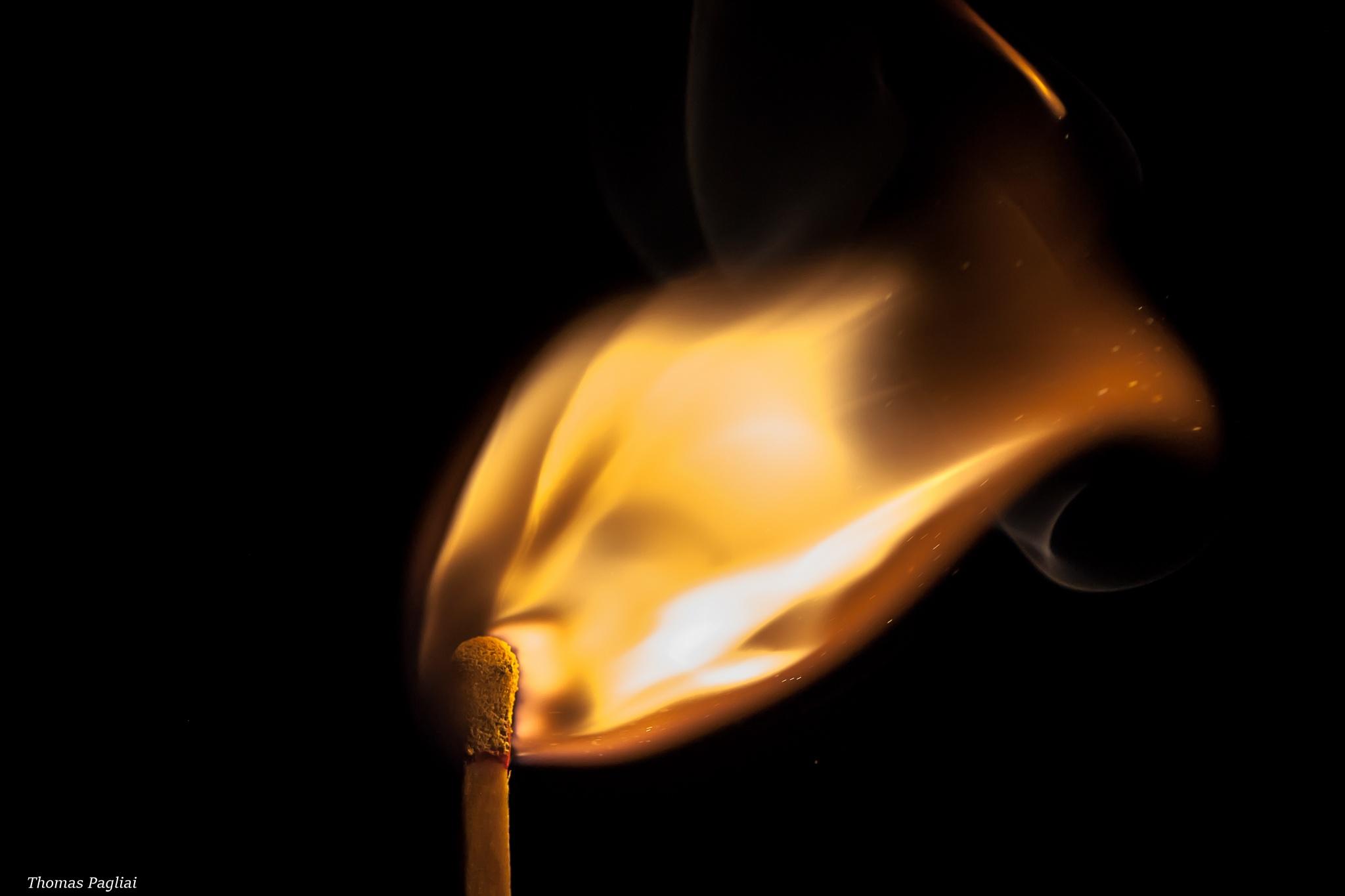 friendly fire by Thomas Pagliai