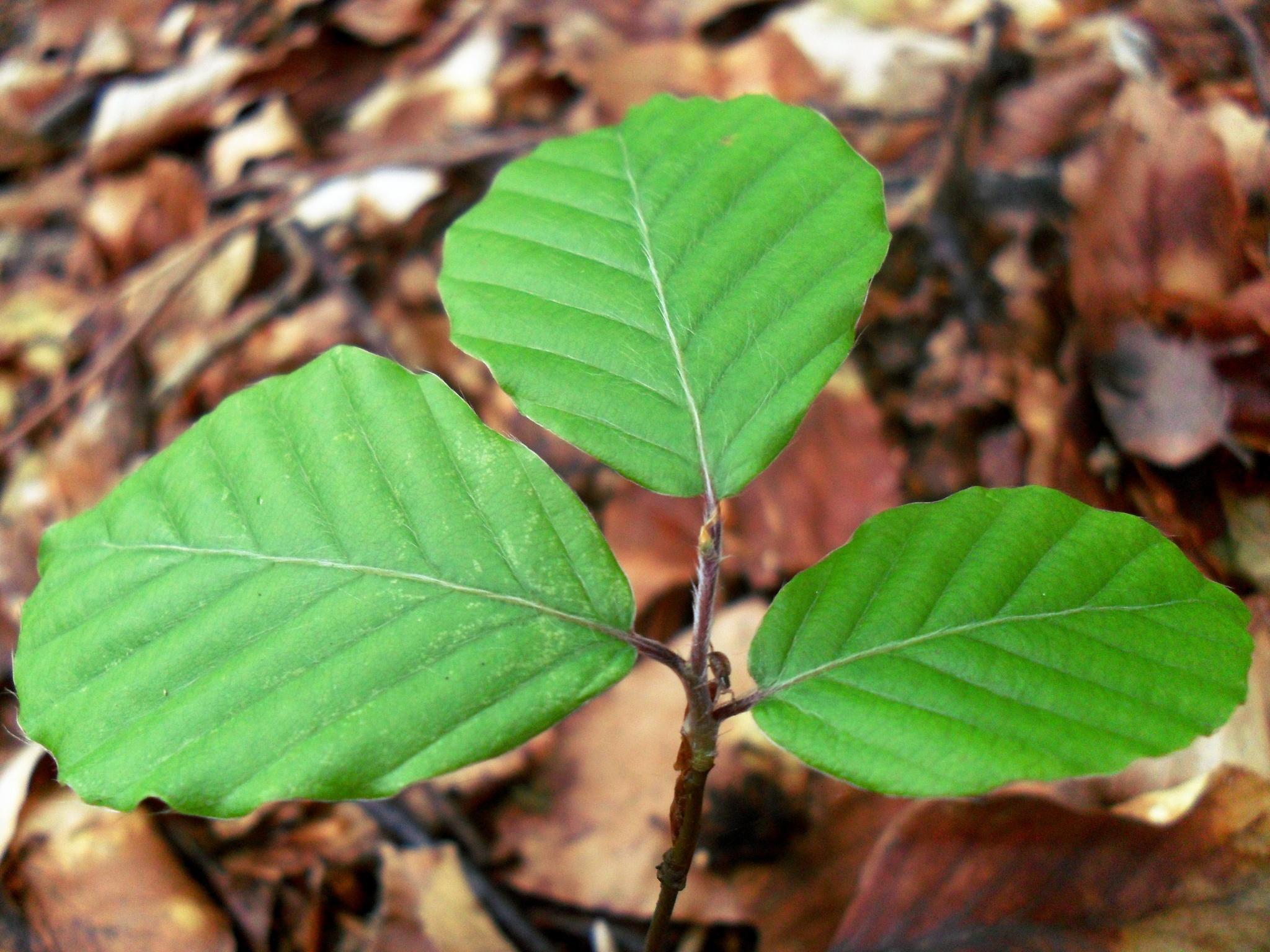 New leafs by Mensur H. Luma