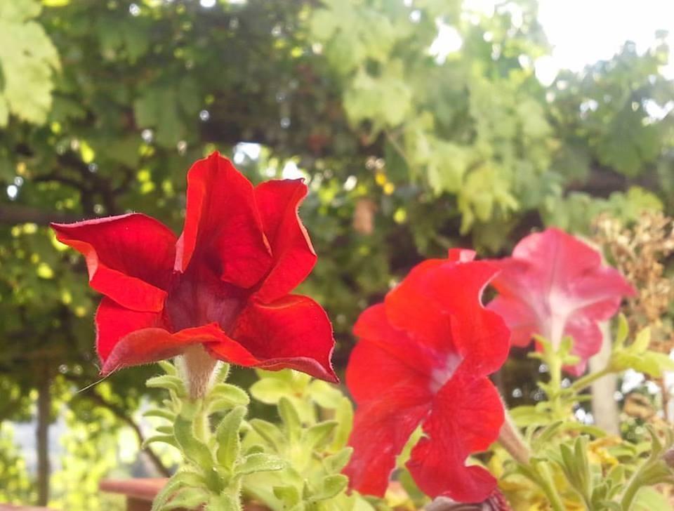 Red flower by Mensur H. Luma