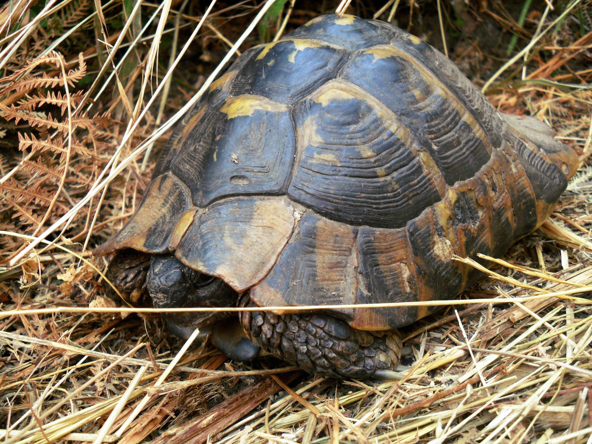 Turtle by Mensur H. Luma