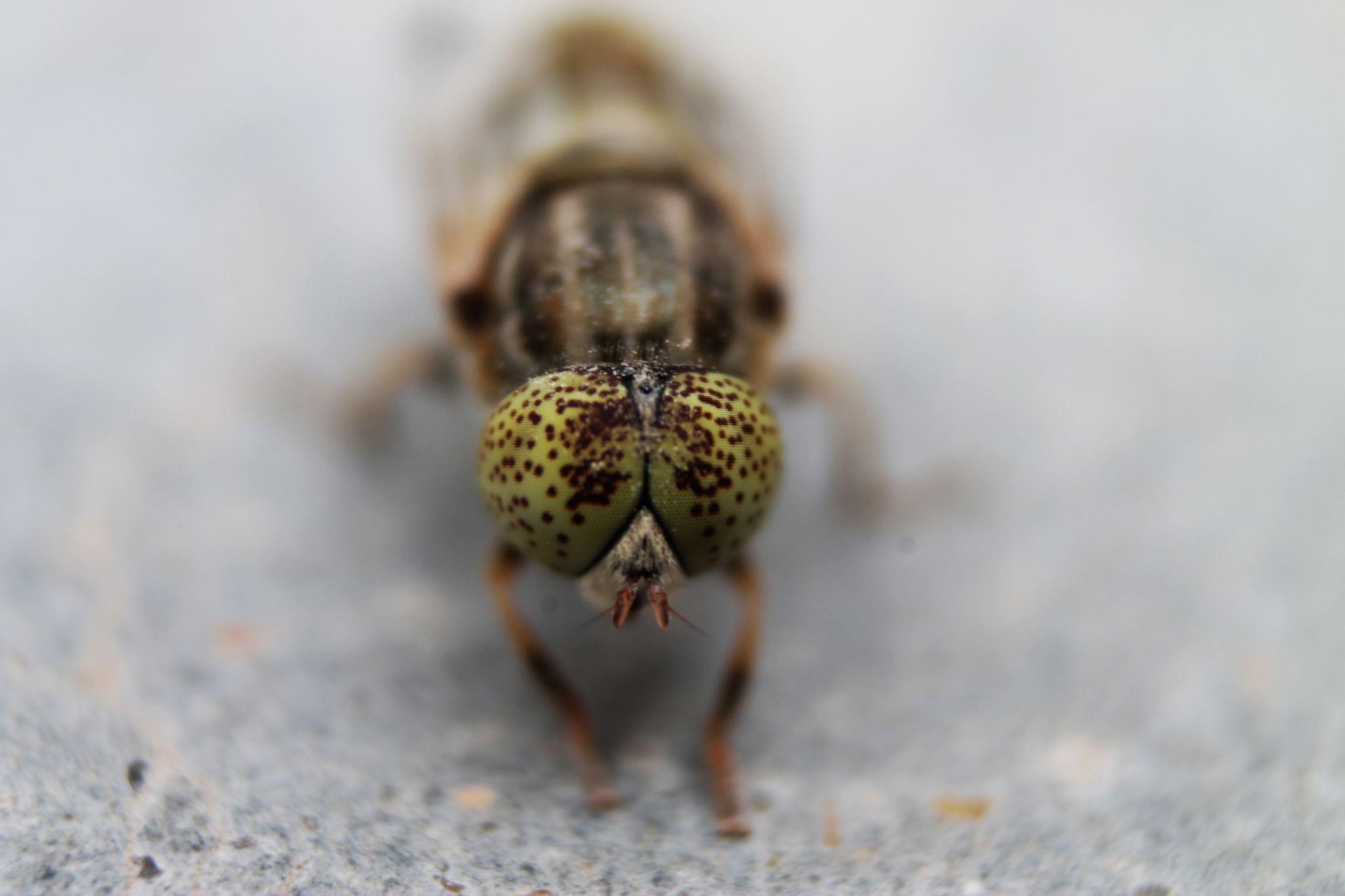 Bee by xamran