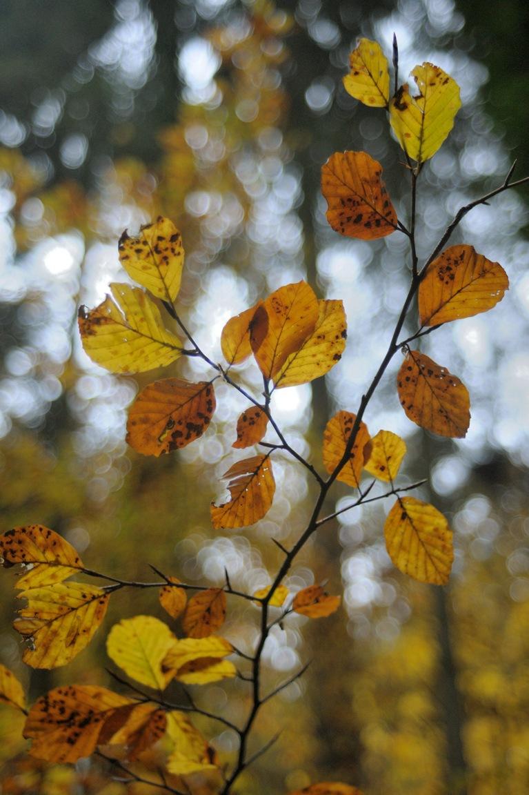 Autumn Twiggy by Funktrainer