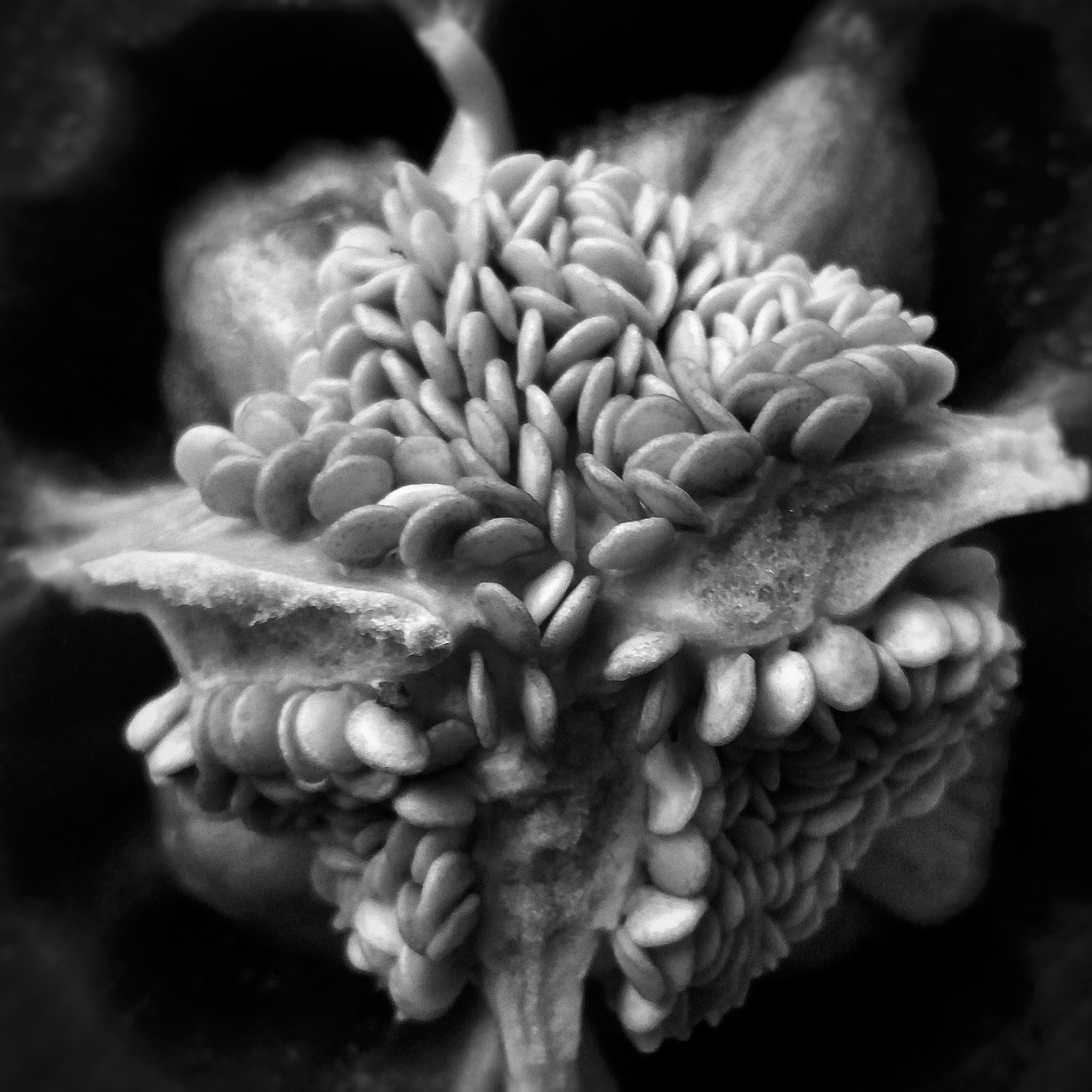 Seeds From The Heart by Minimeme Photo Art