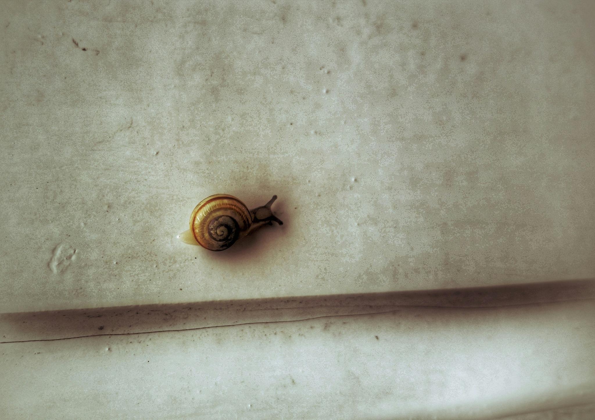 Little One by Minimeme Photo Art