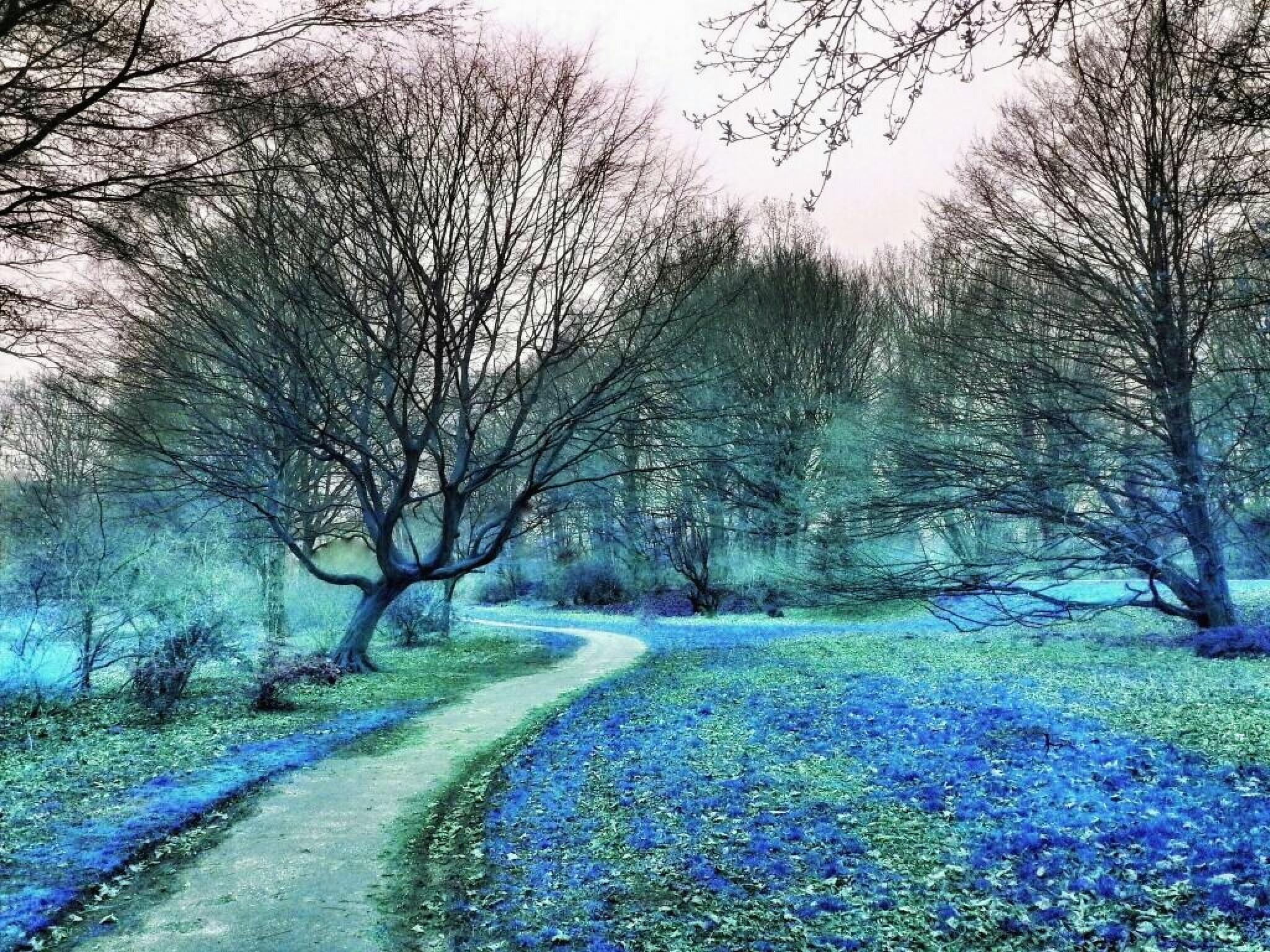 Frozen Forest by Minimeme Photo Art