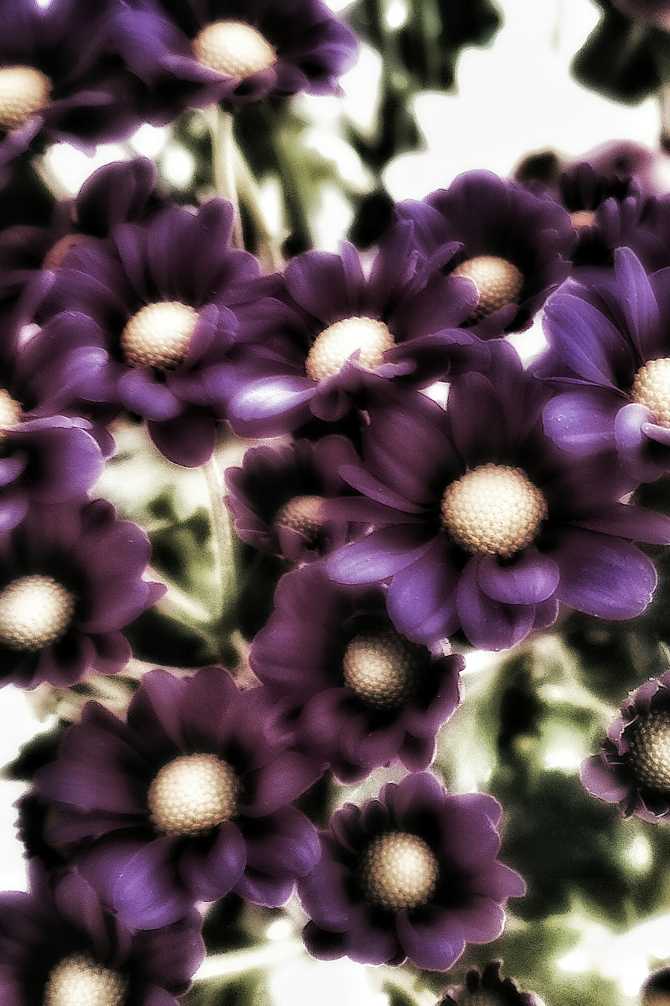 Photo in Still Life #photography #flowers #art #edit #soft #purple #atmosphere