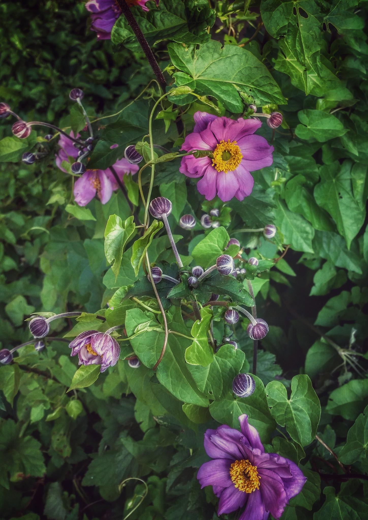 Summer Joy by Minimeme Photo Art