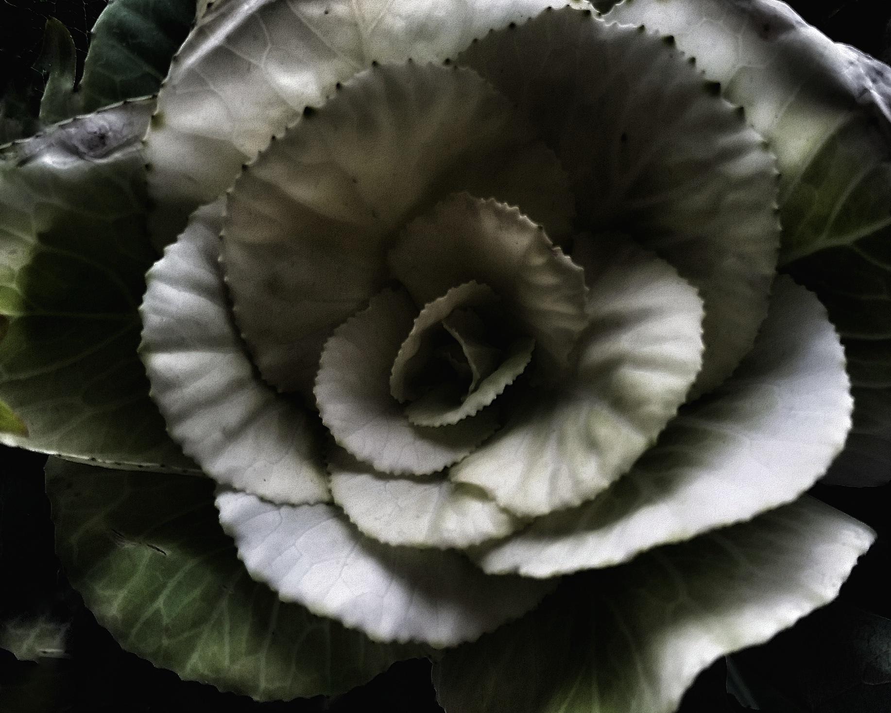 Weird Rose by Minimeme Photo Art