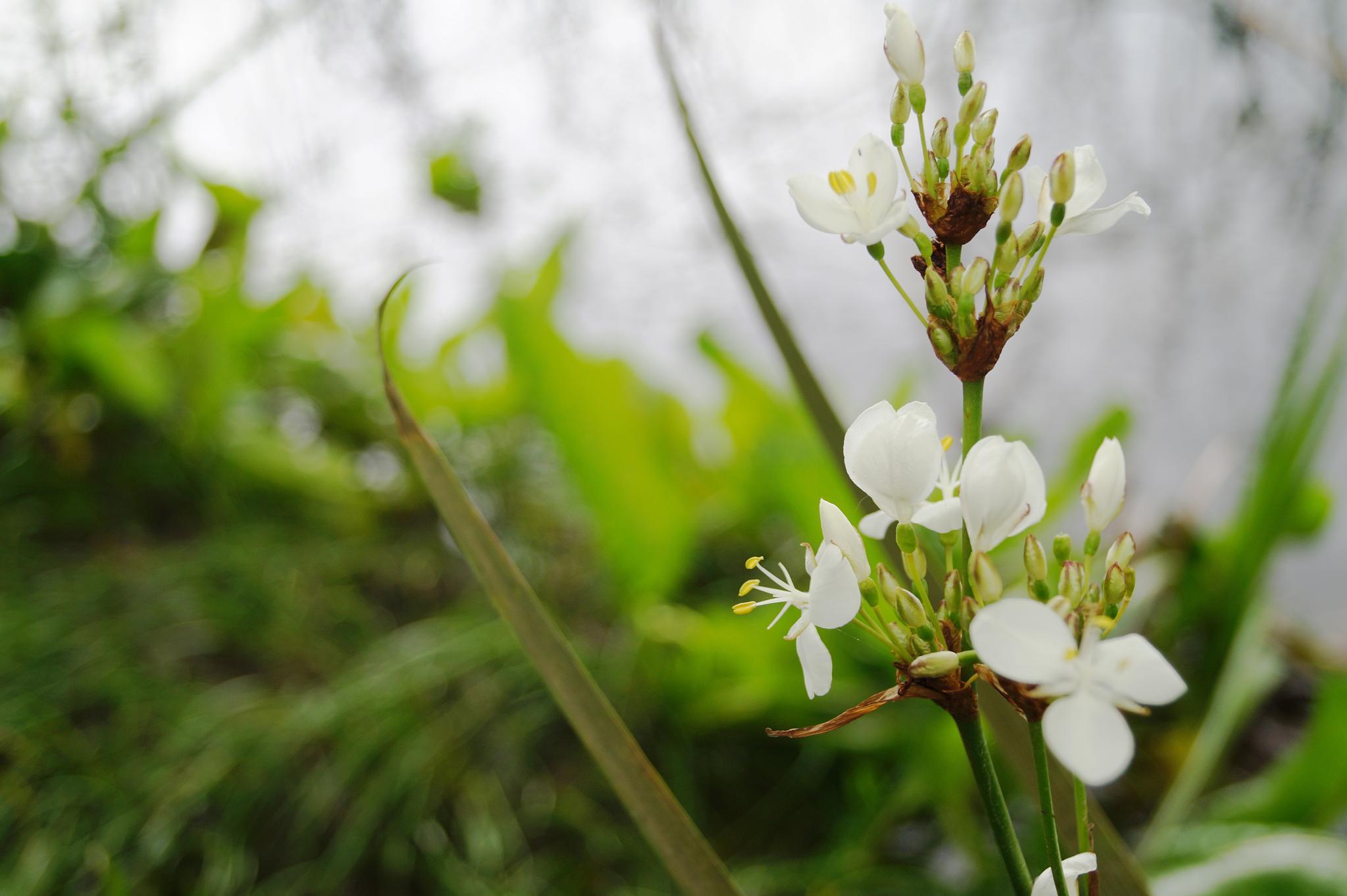florecilla  by María José