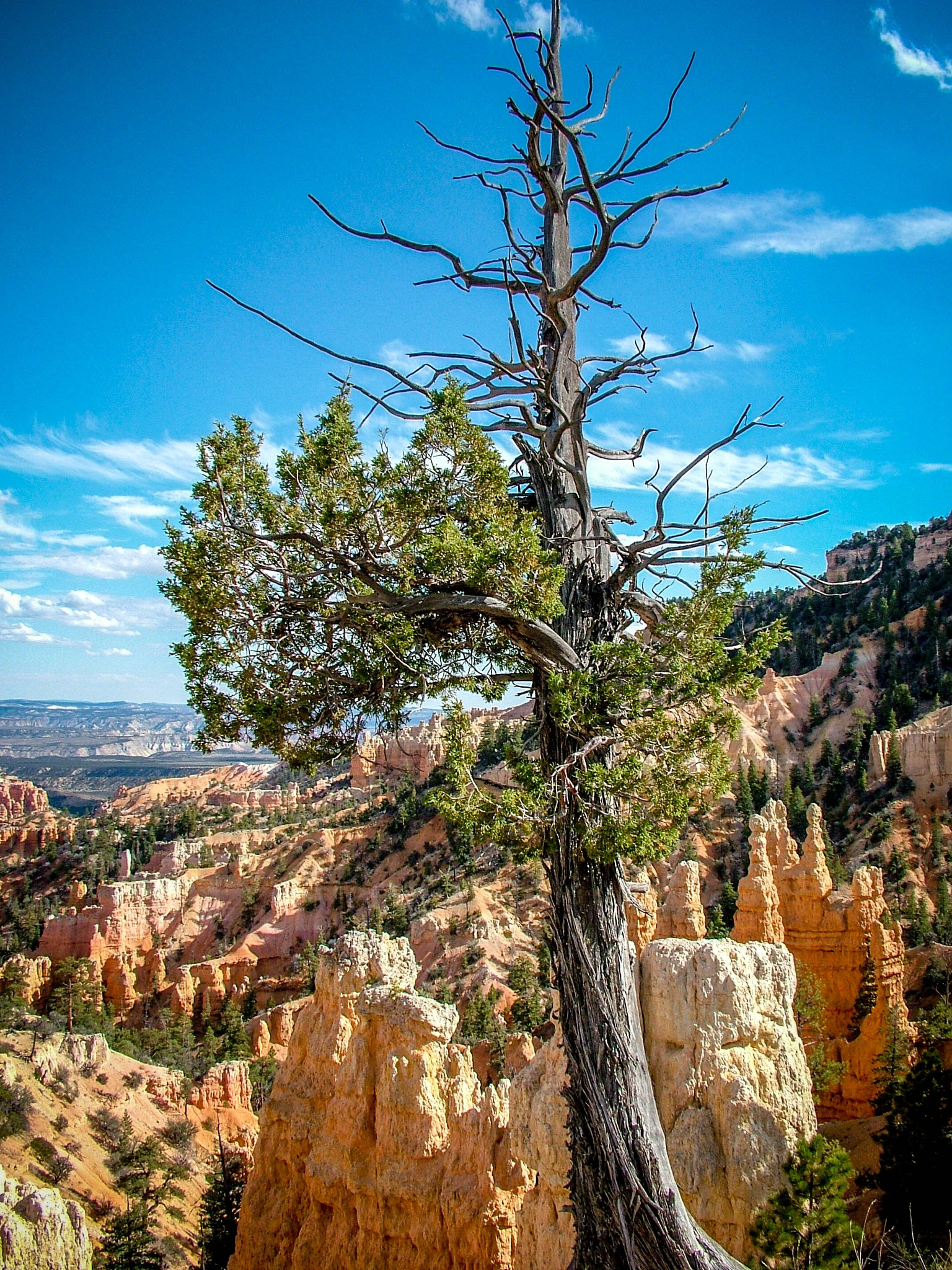 Bryce Canyon NP by Richy