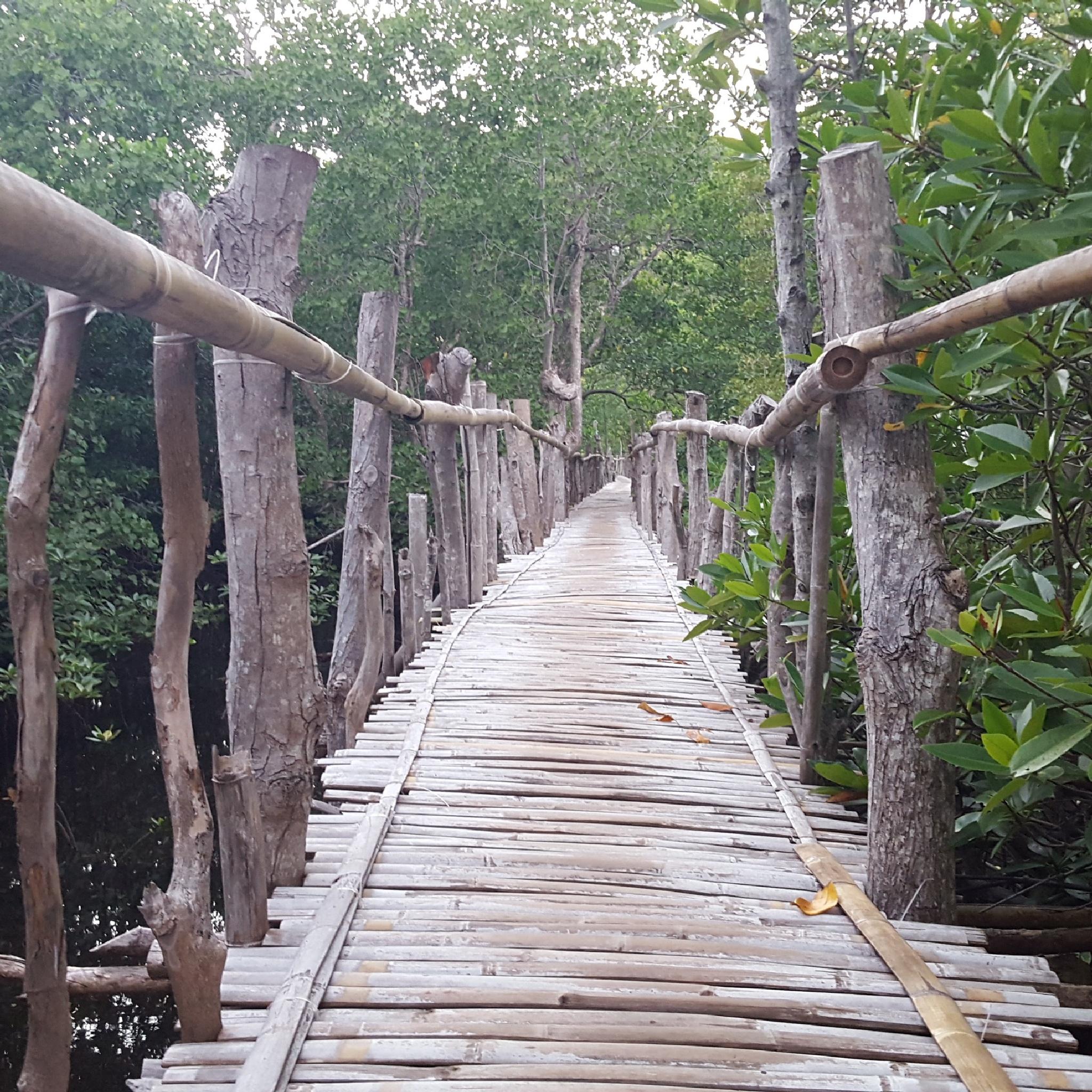 Mangrove walk by Robin Dekker