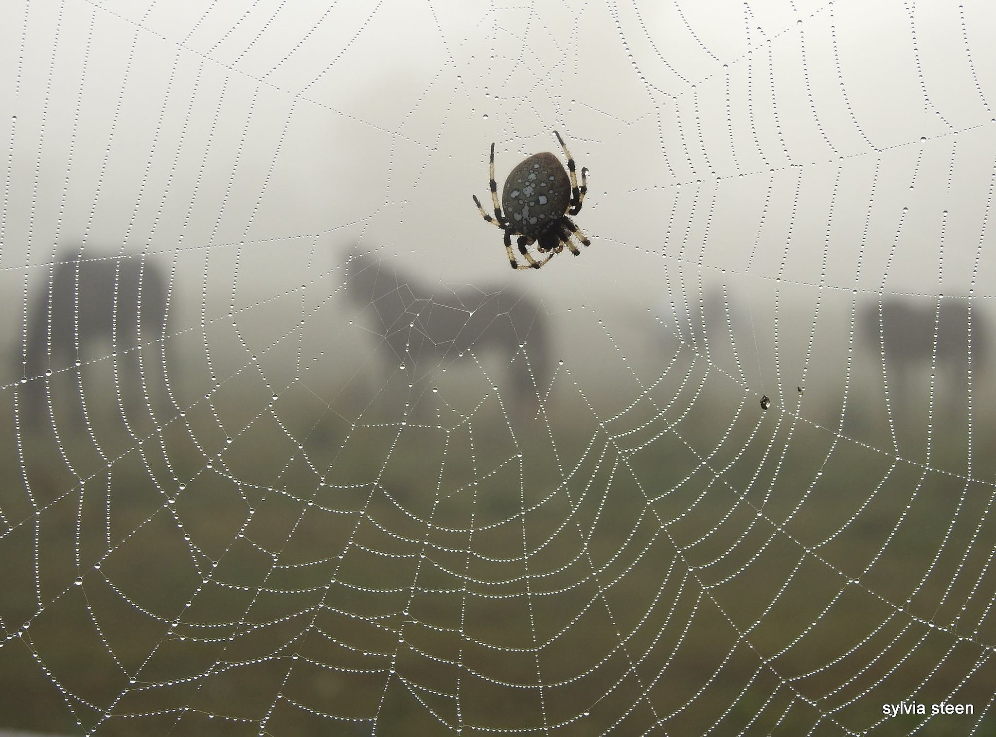 spider web and horses by owllady