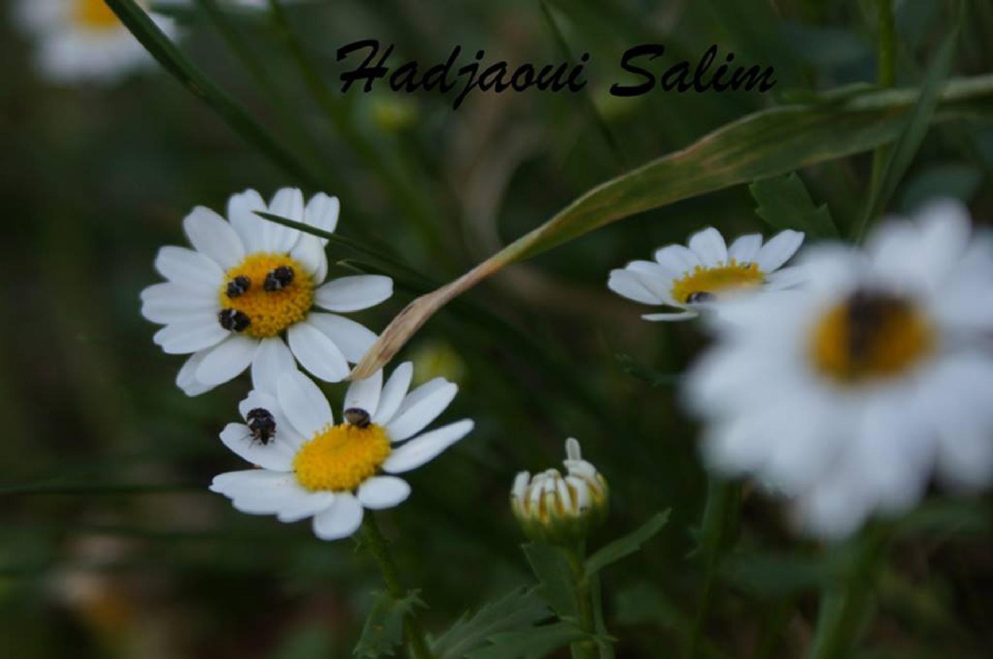 Untitled by Hakim Hadjaoui