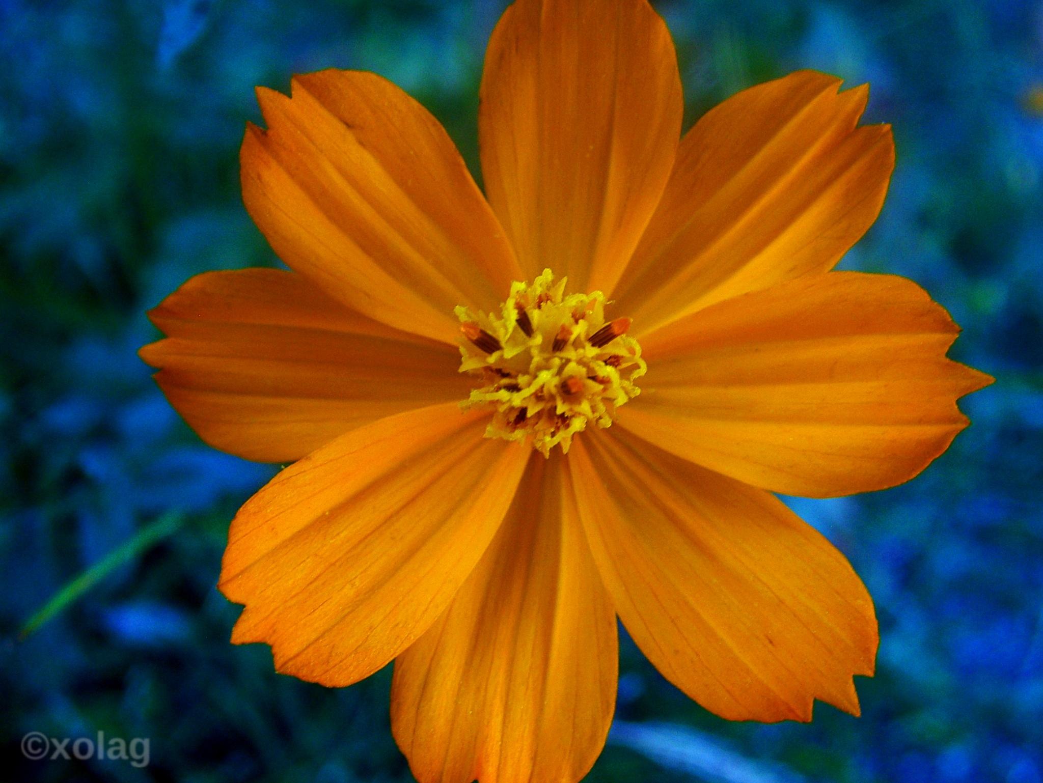 petals by J.R.Galindo