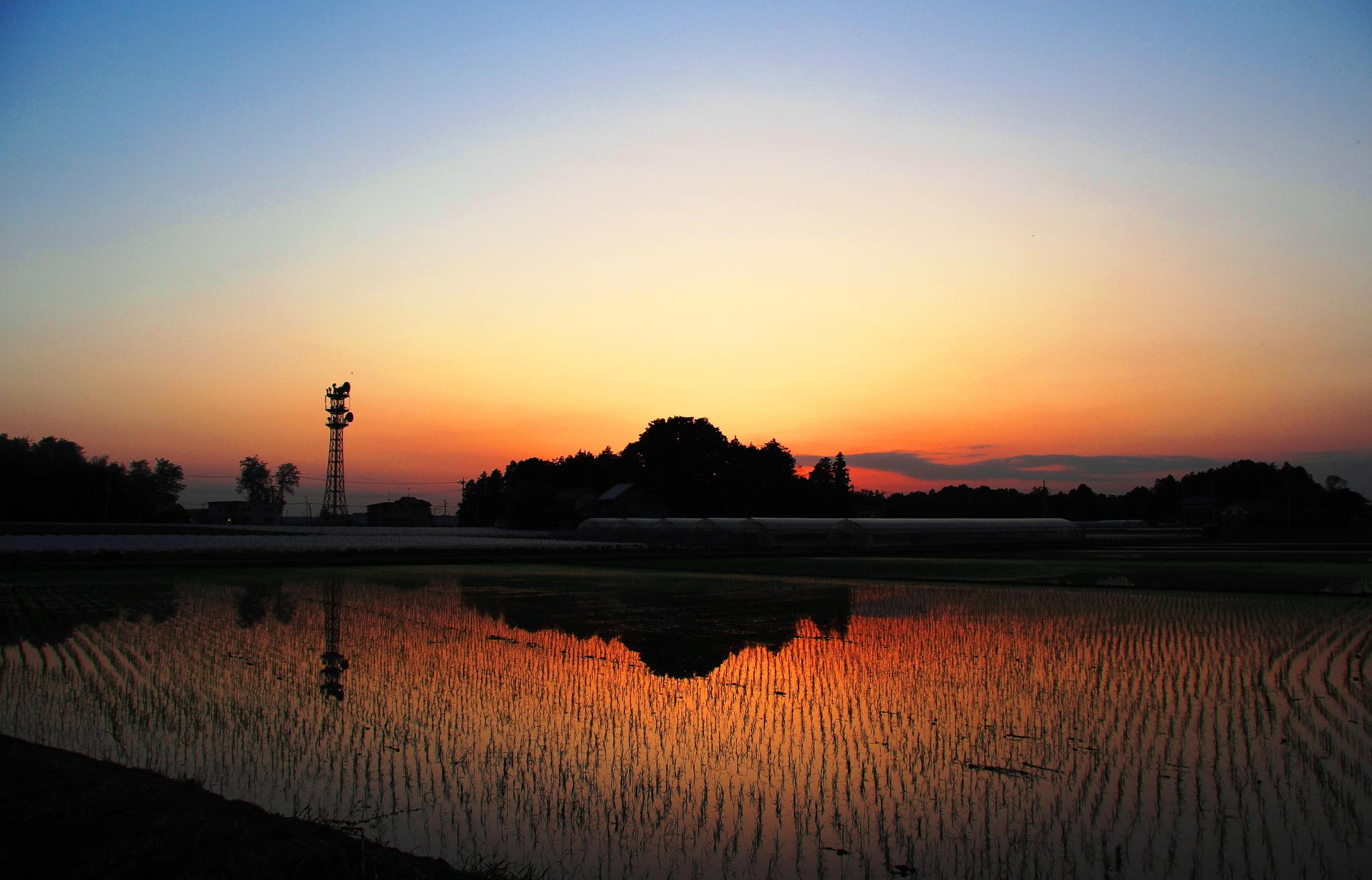 Rice paddy.... by shigeo yukizawa