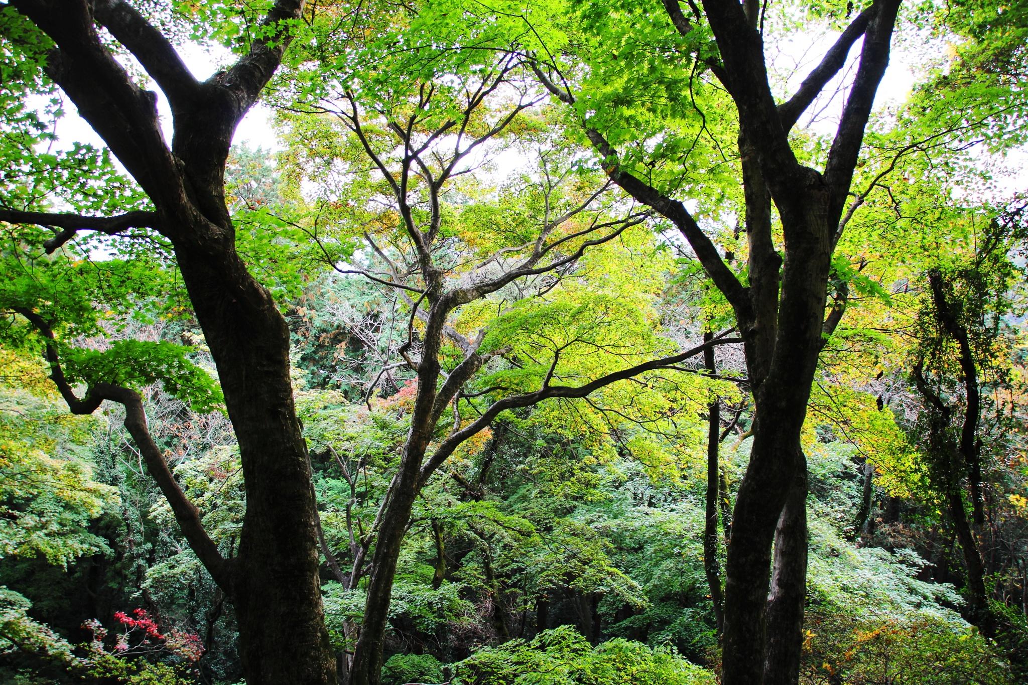 Forest in autumn by shigeo yukizawa