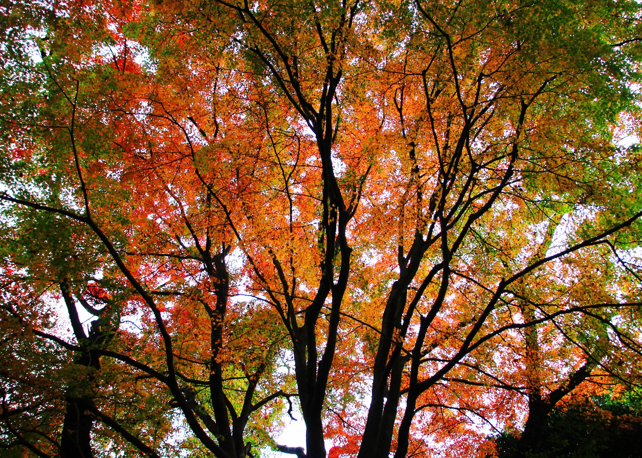 Autumn forest... by shigeo yukizawa