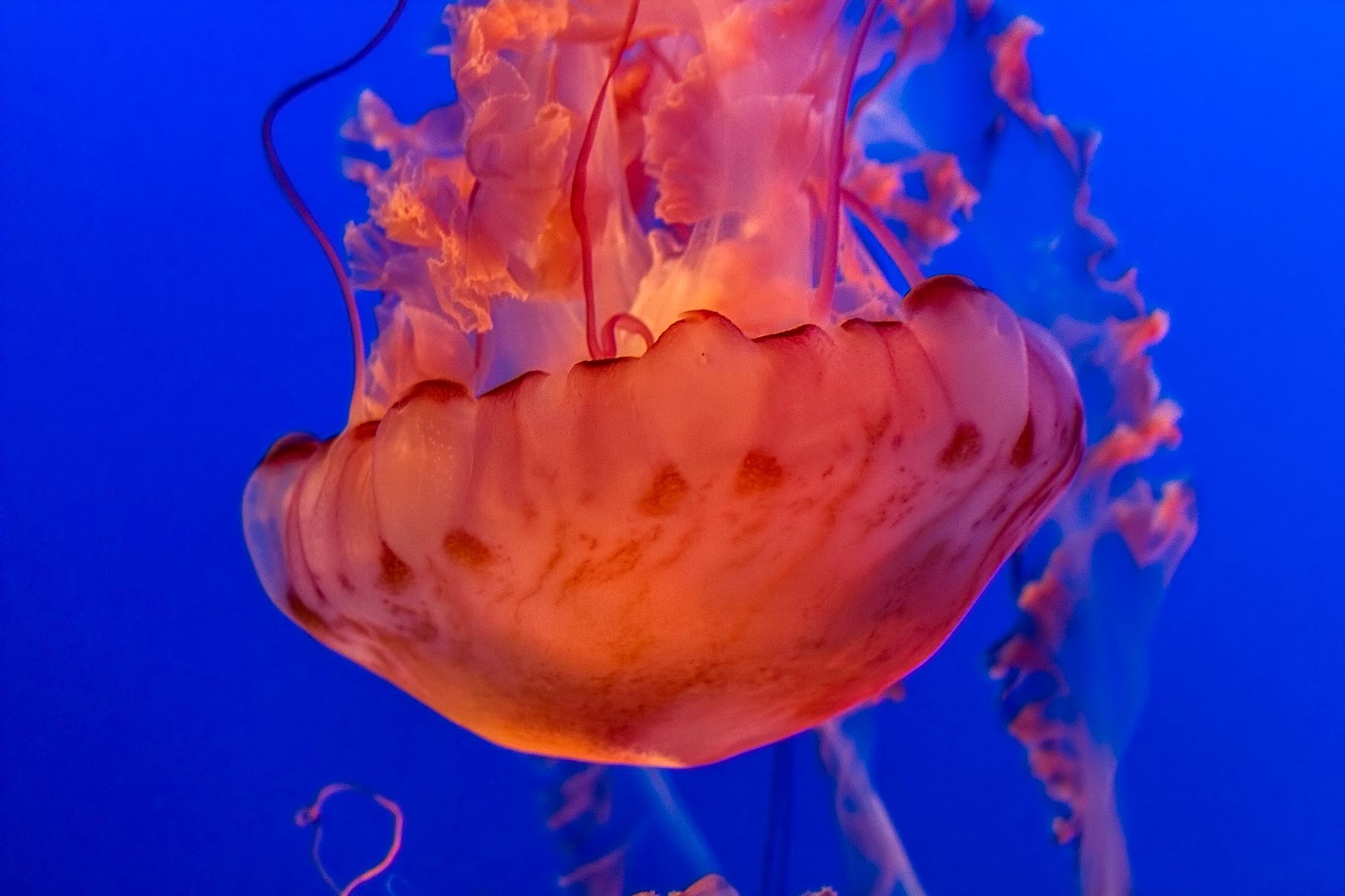 Jelly by balajisounder