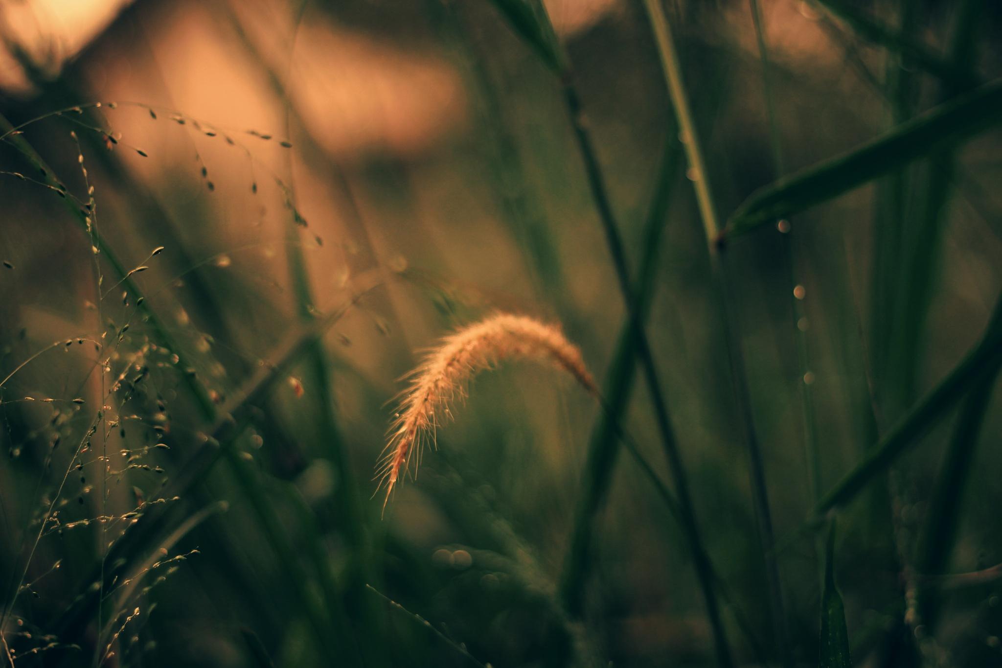 weeds by Nanang AS