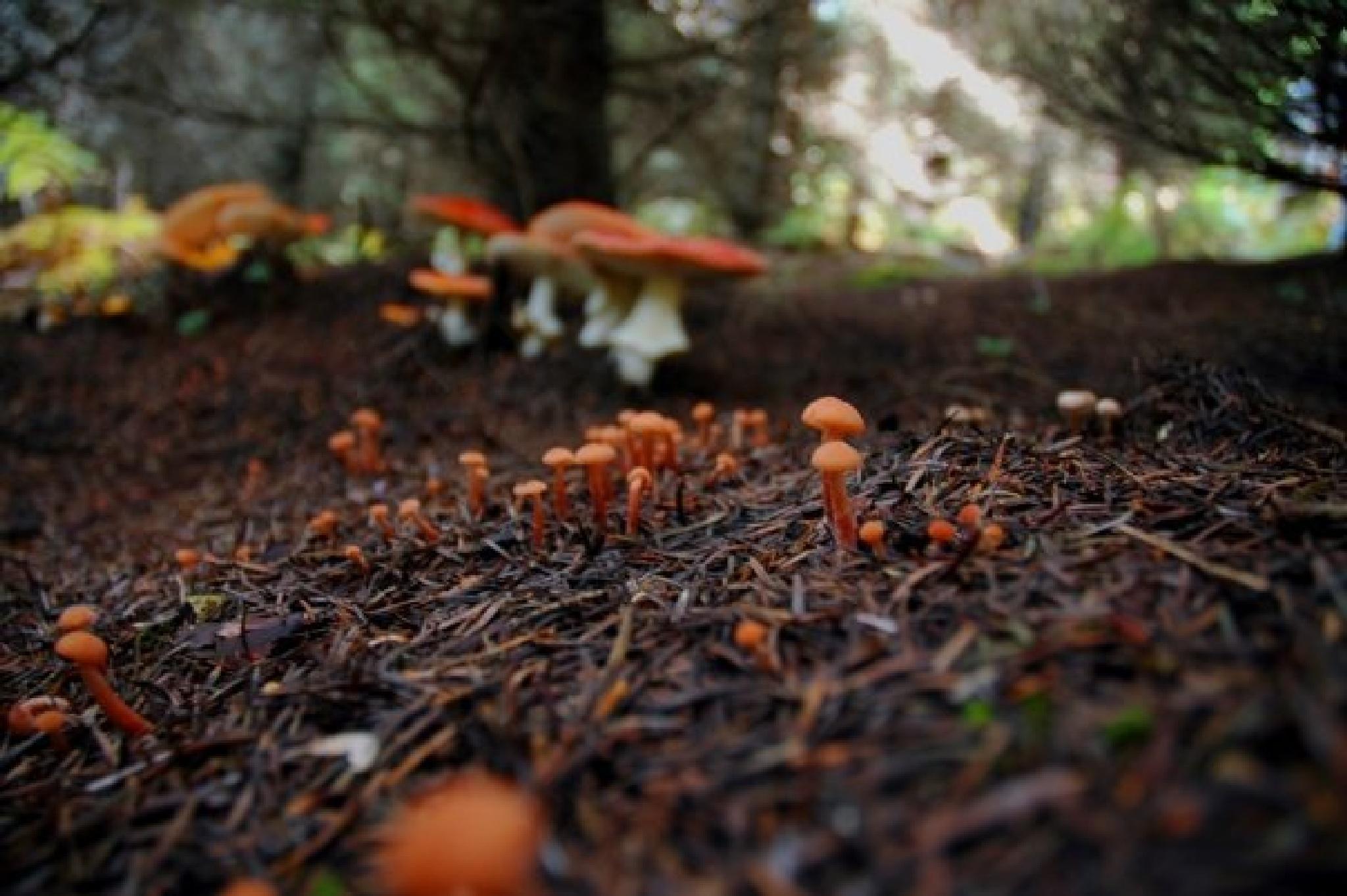 mushroom  by evamil