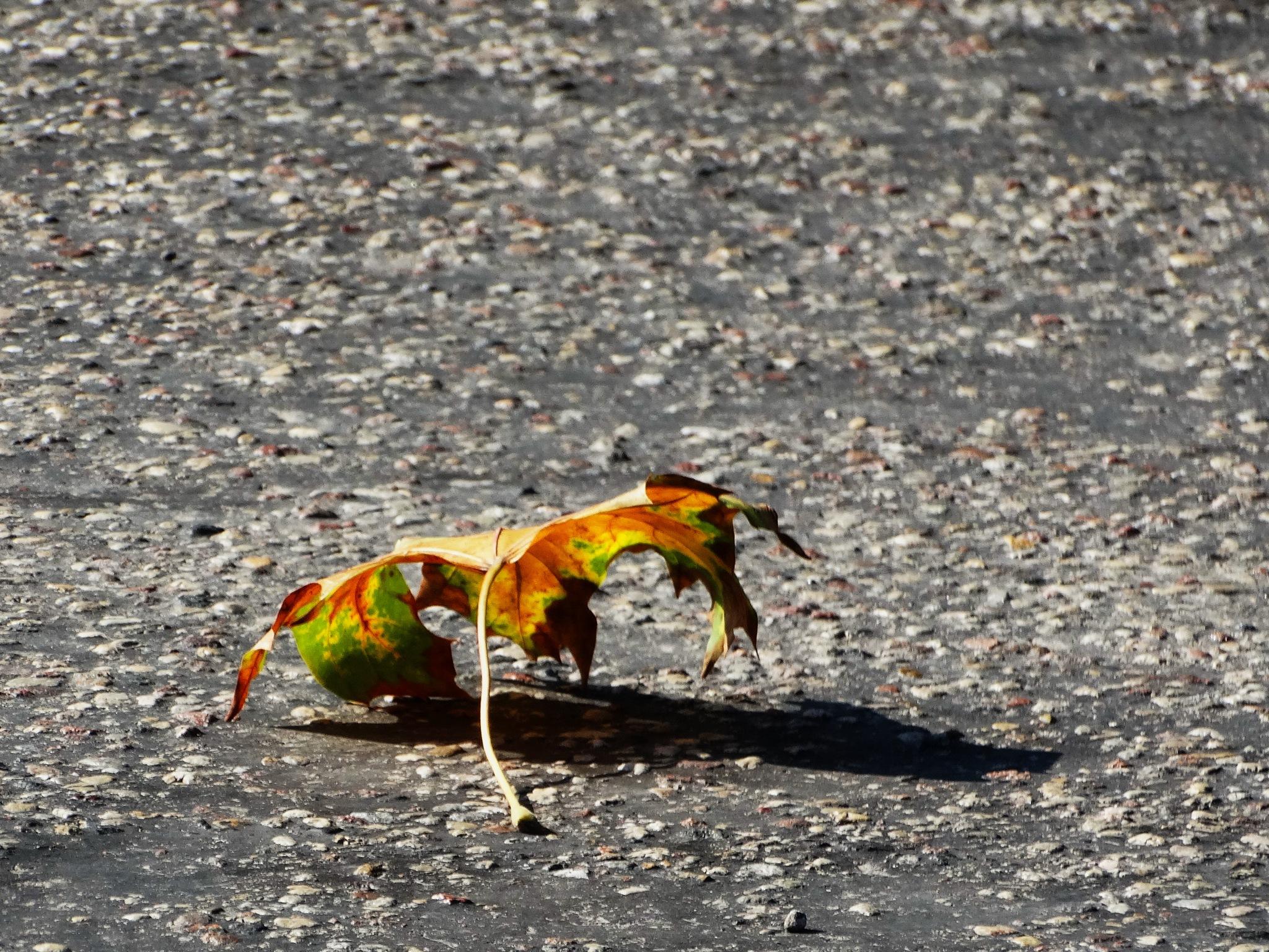 Autumn leaf by Ilga Freimane