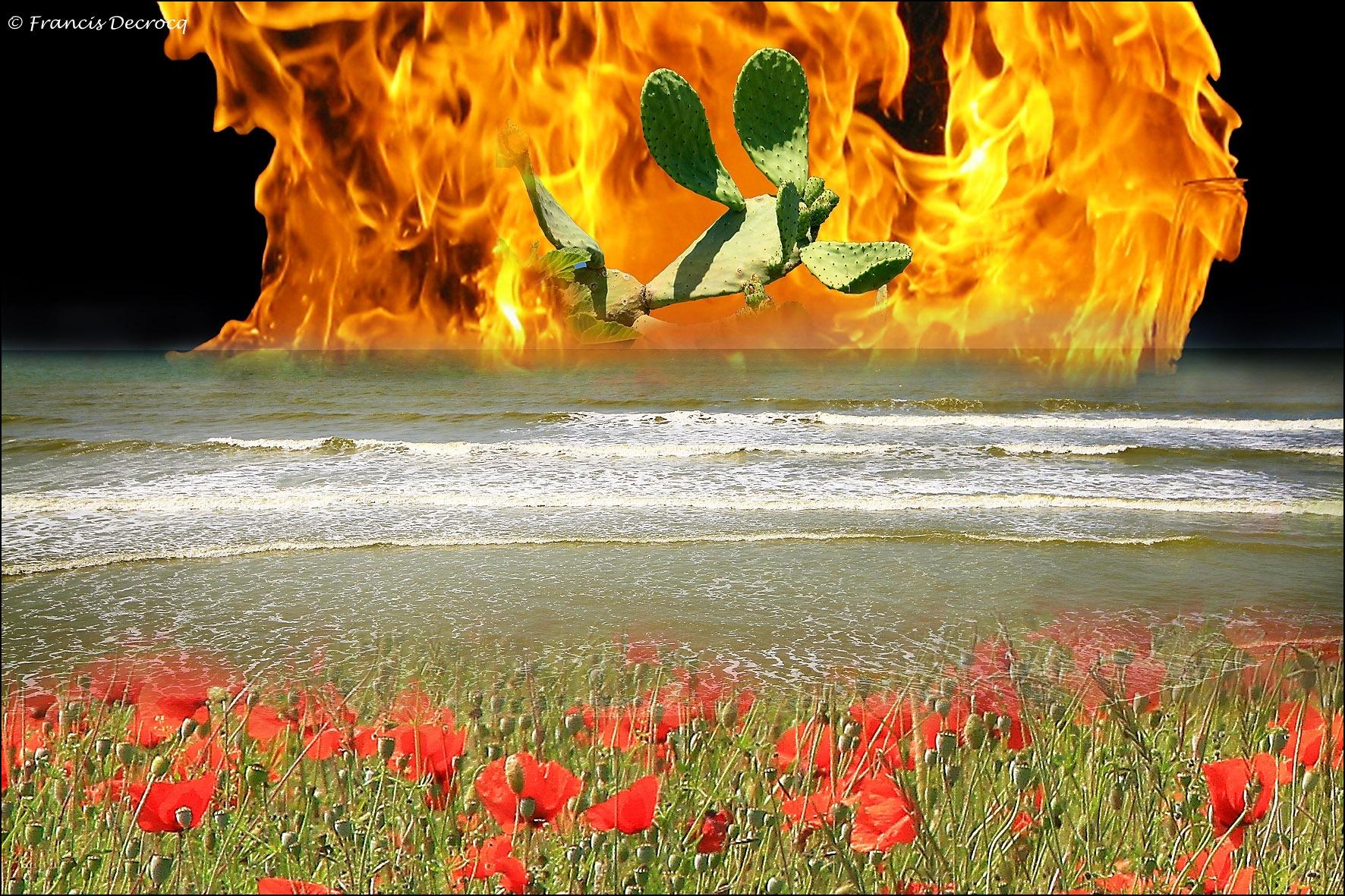 Vlammen by Francis Decrocq