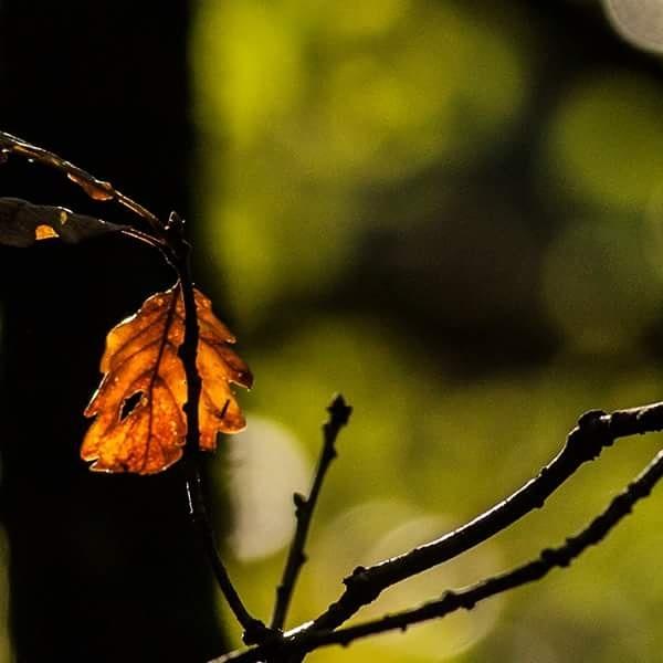 autumn  by Julie Holt