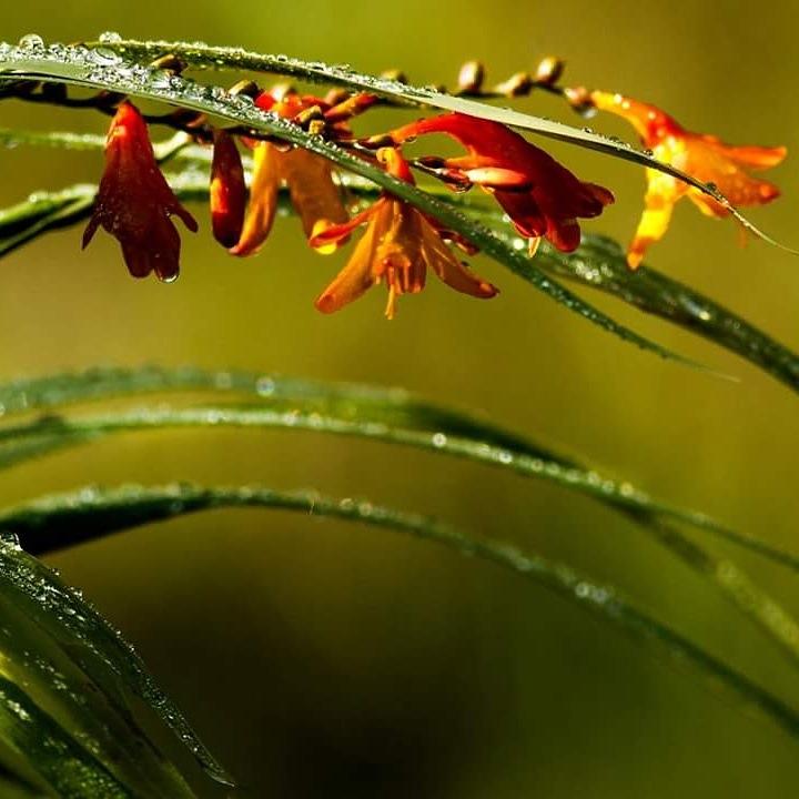 Droplets by Julie Holt