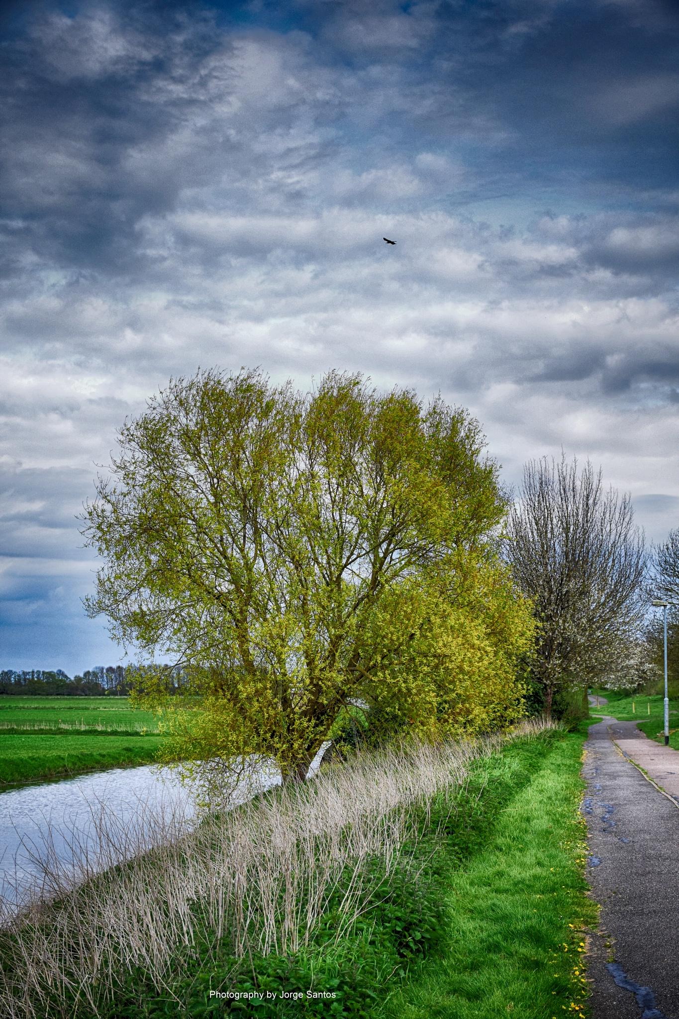 Near the river... by Jorge_Santos