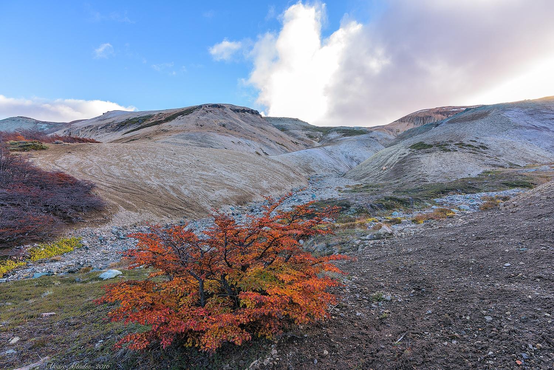 Colors of autumn in the mountain by Álvaro Méndez Vielmas