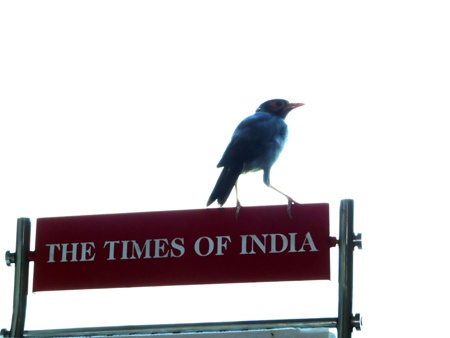 The Times by NavedAnsari