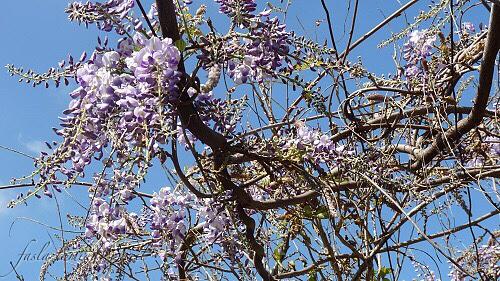 Le printemps by Faslalamiaa