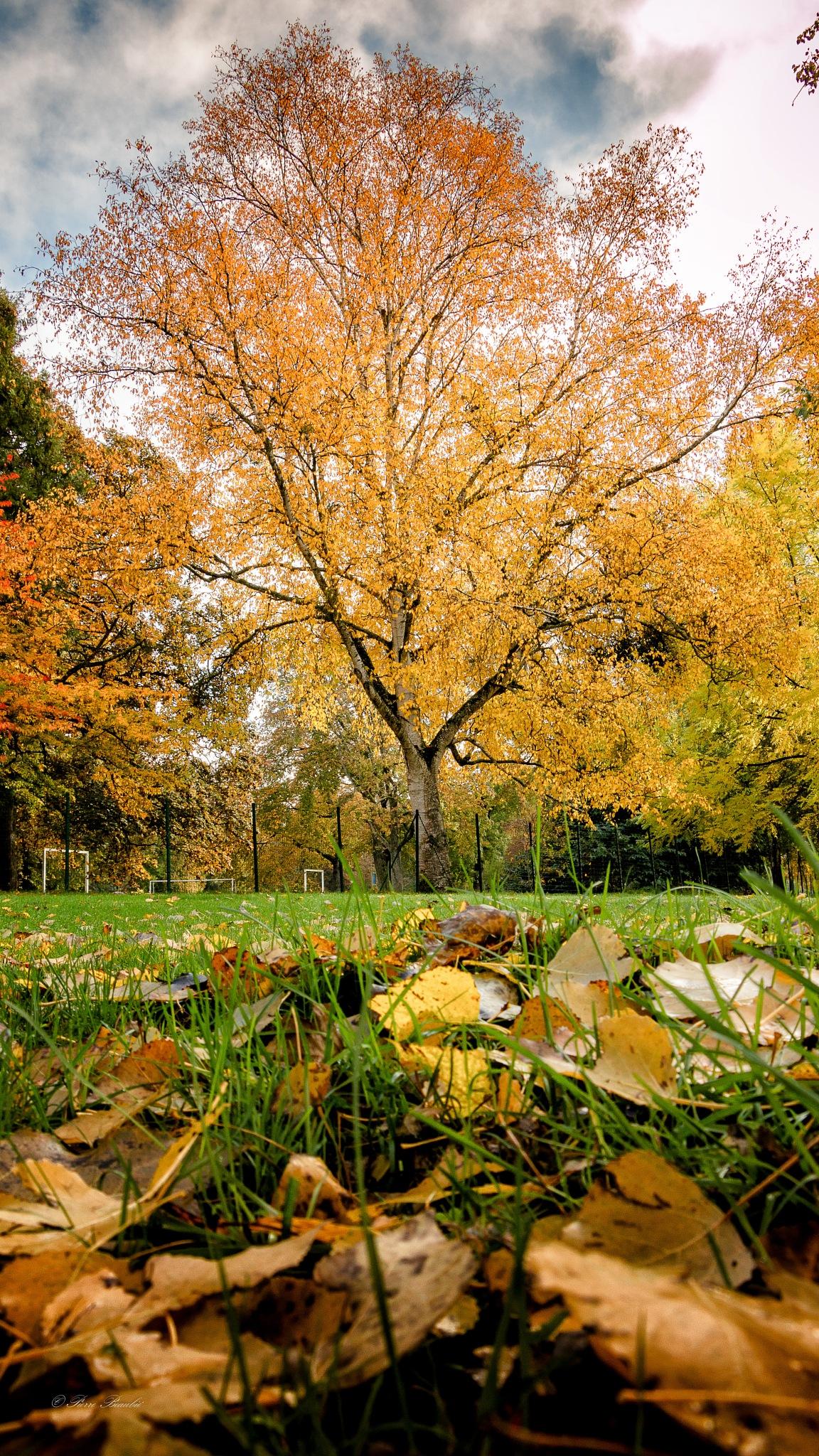 Fall(en) by Pierre Beaubié
