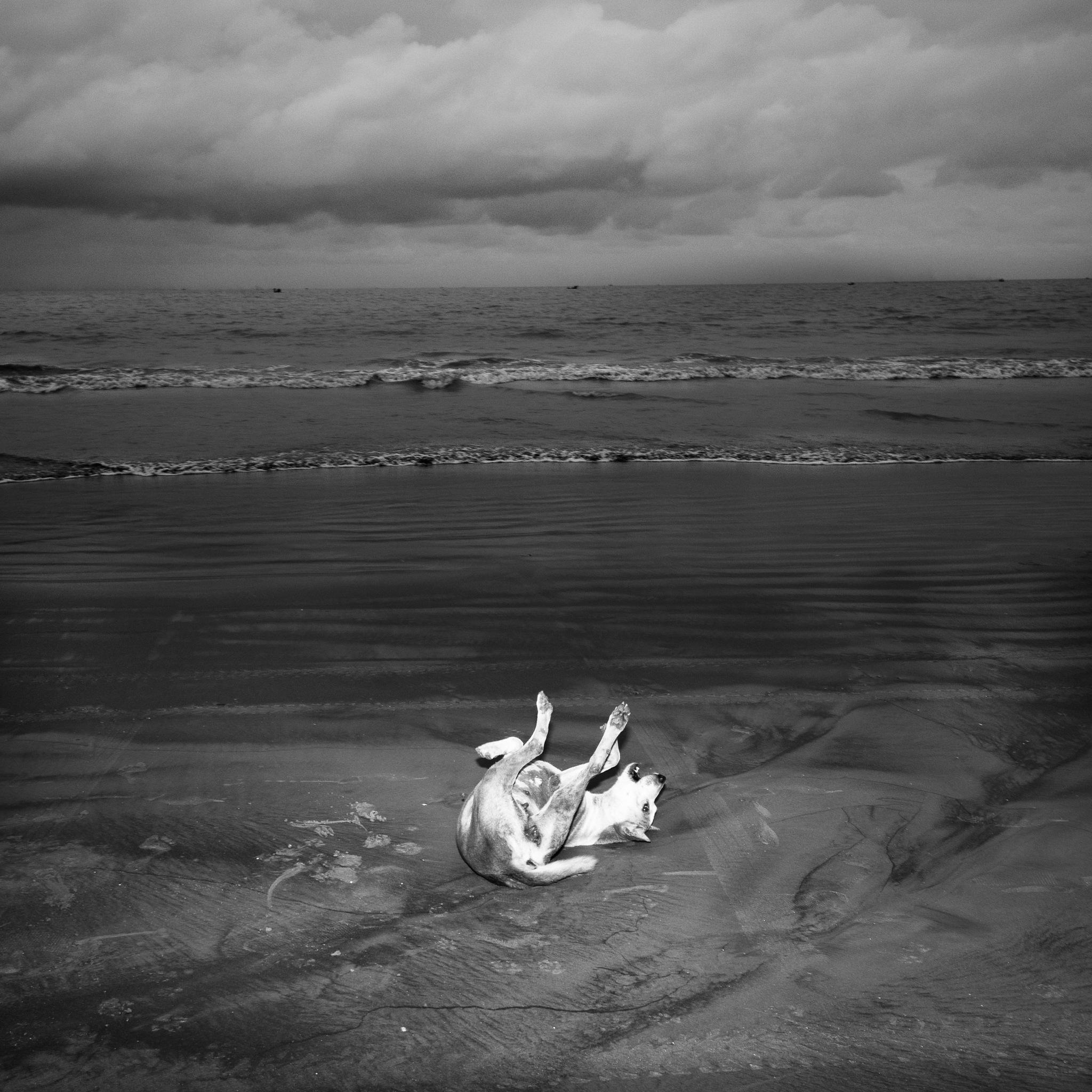untitled  by Tausif Rahman
