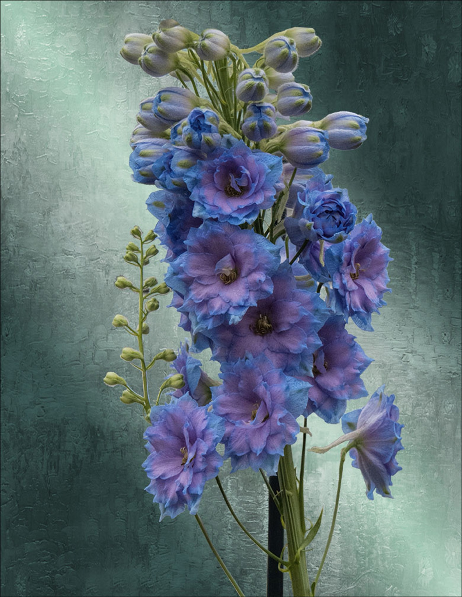 A Study in Blue and Lavendar by Bob Yankle